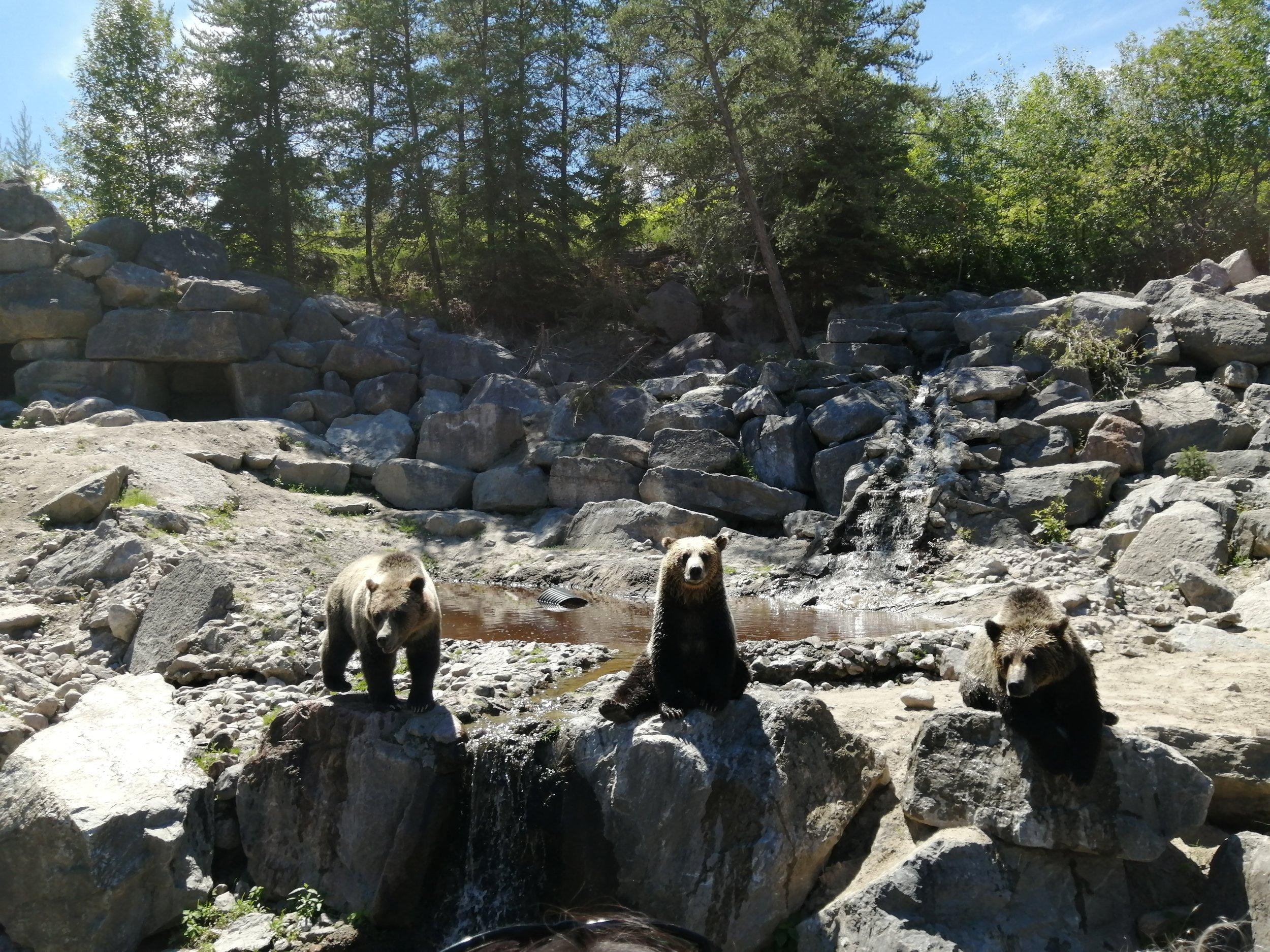 voyage-famille-lac-saint-jean-zoo-st-félicien-grizzlis-sauvage-nature-forêt