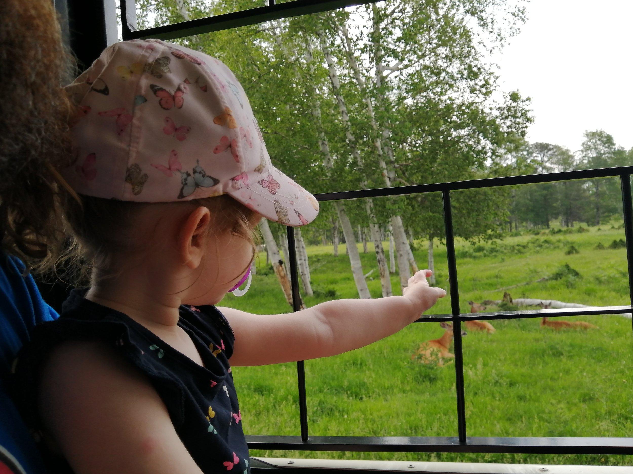 voyage-famille-lac-saint-jean-zoo-st-félicien-sauvage-balade-train-visite-à-voir-activité-attraction-coup-de-coeur