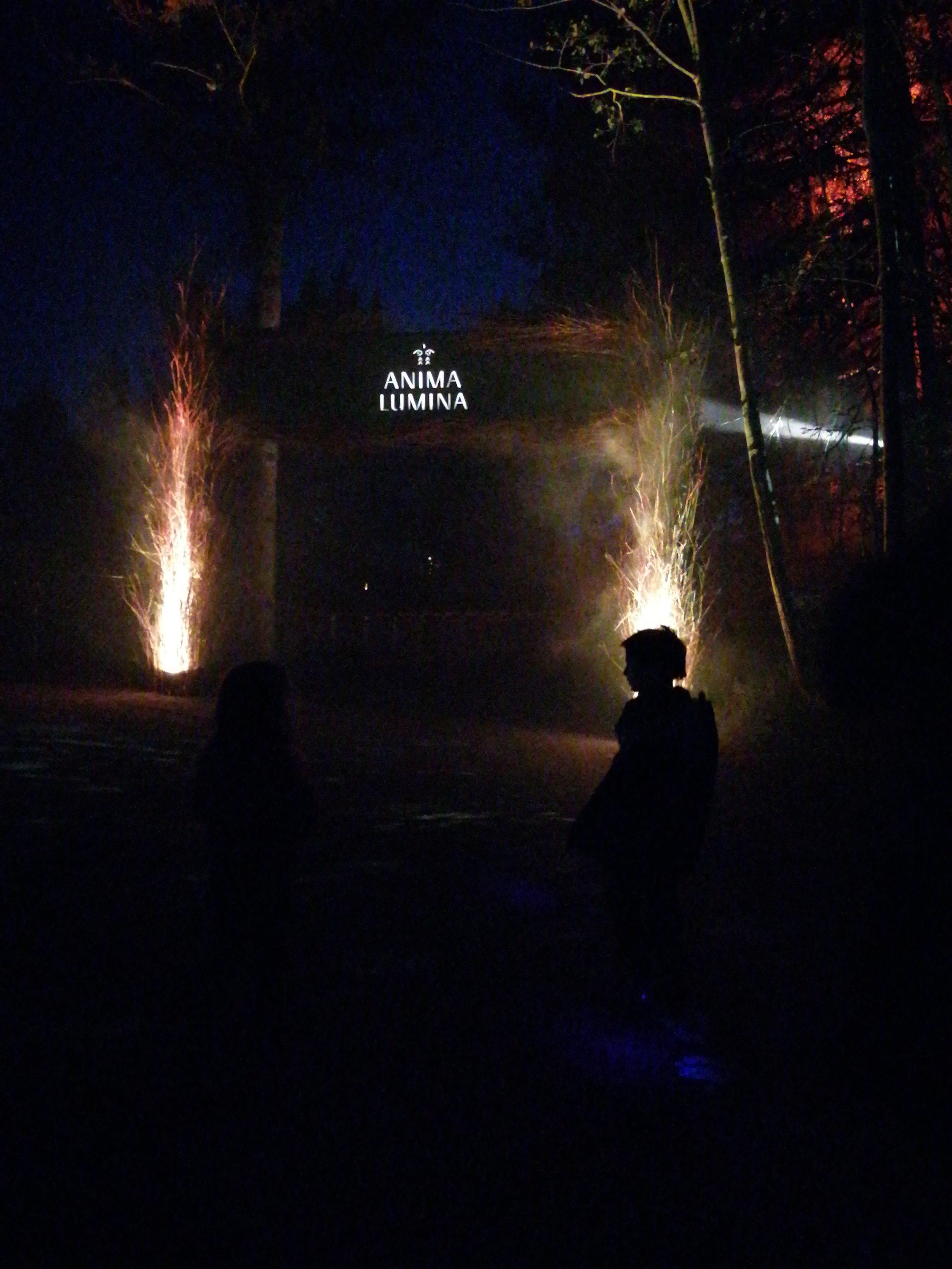 voyage-famille-lac-saint-jean-zoo-st-félicien-visite-nuit-illuminé-anima-lumina