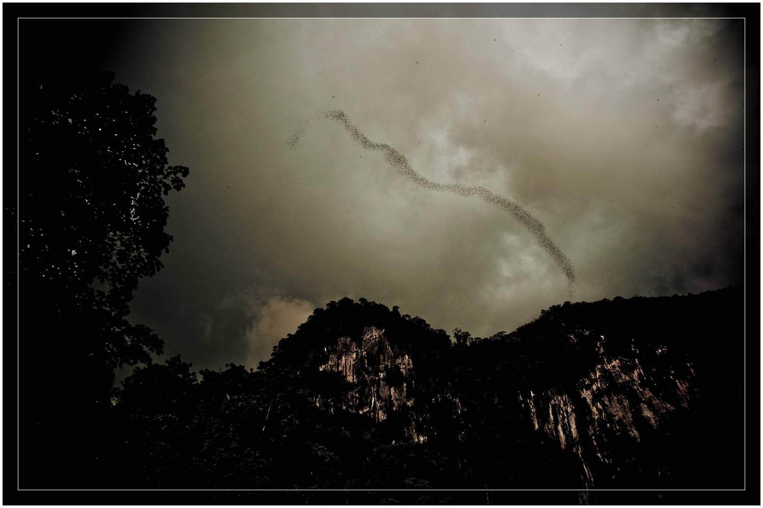 """Bat Exodus"" Deer Cave, Mulu National Park, Sarawak"