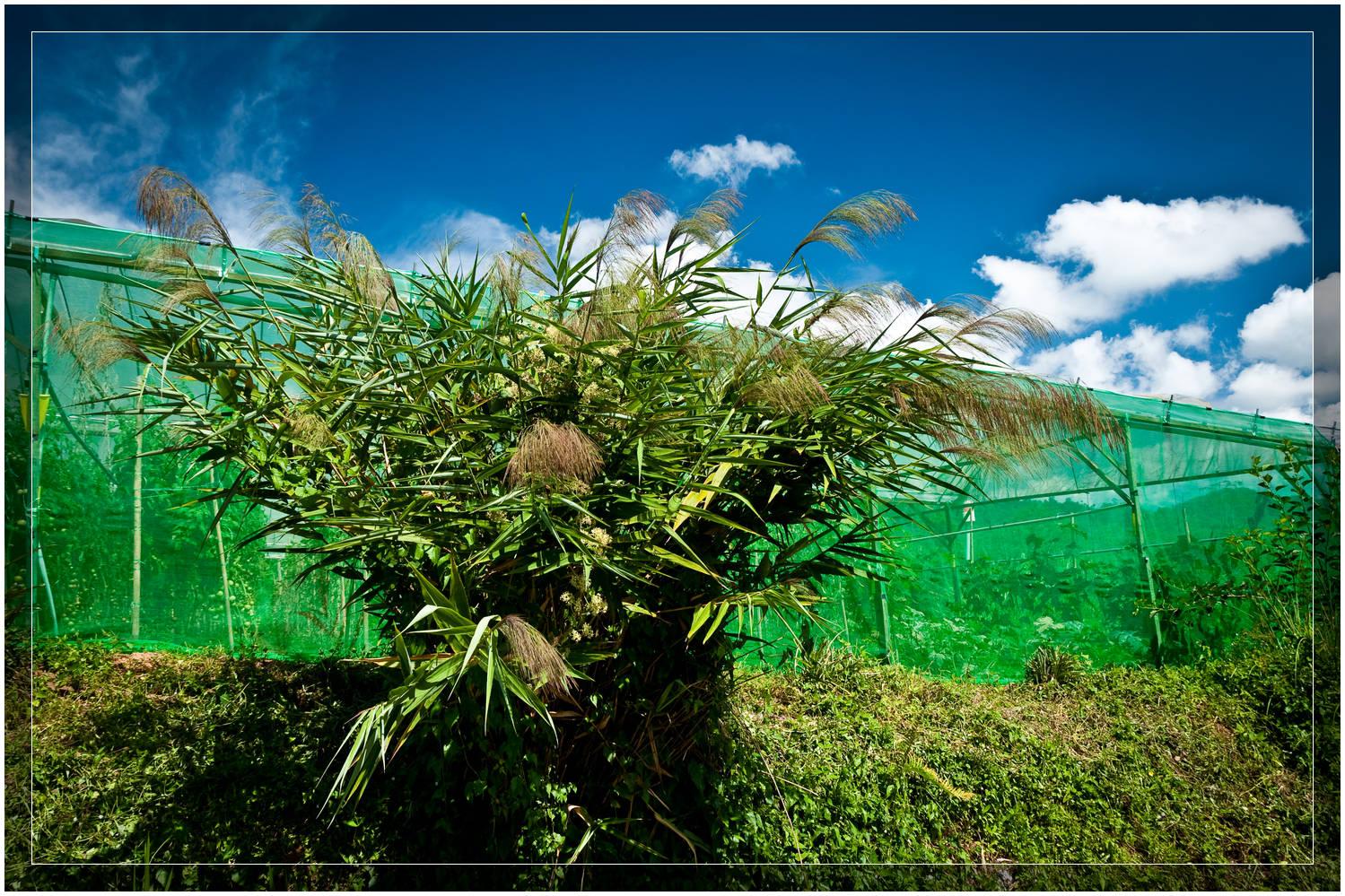 Organic Farming in Malaysia
