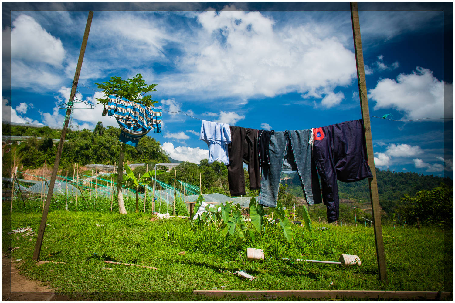"""Organic Farming in the Cameron Highlands, Malaysia"""