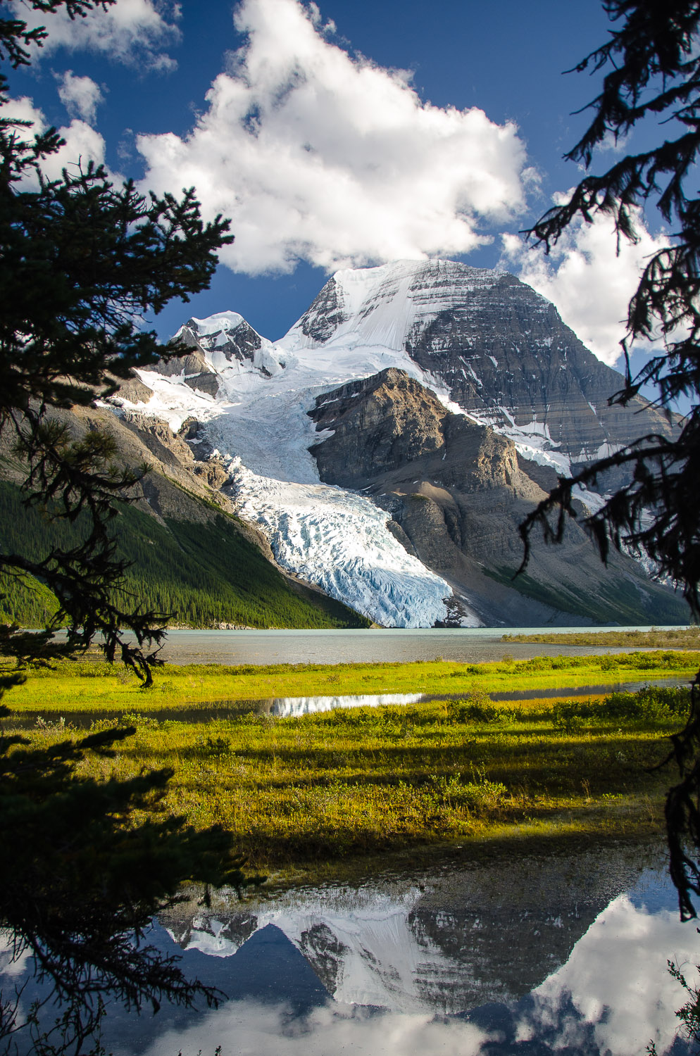 Reflections of Berg Glacier and Mt Robson through the meadow.