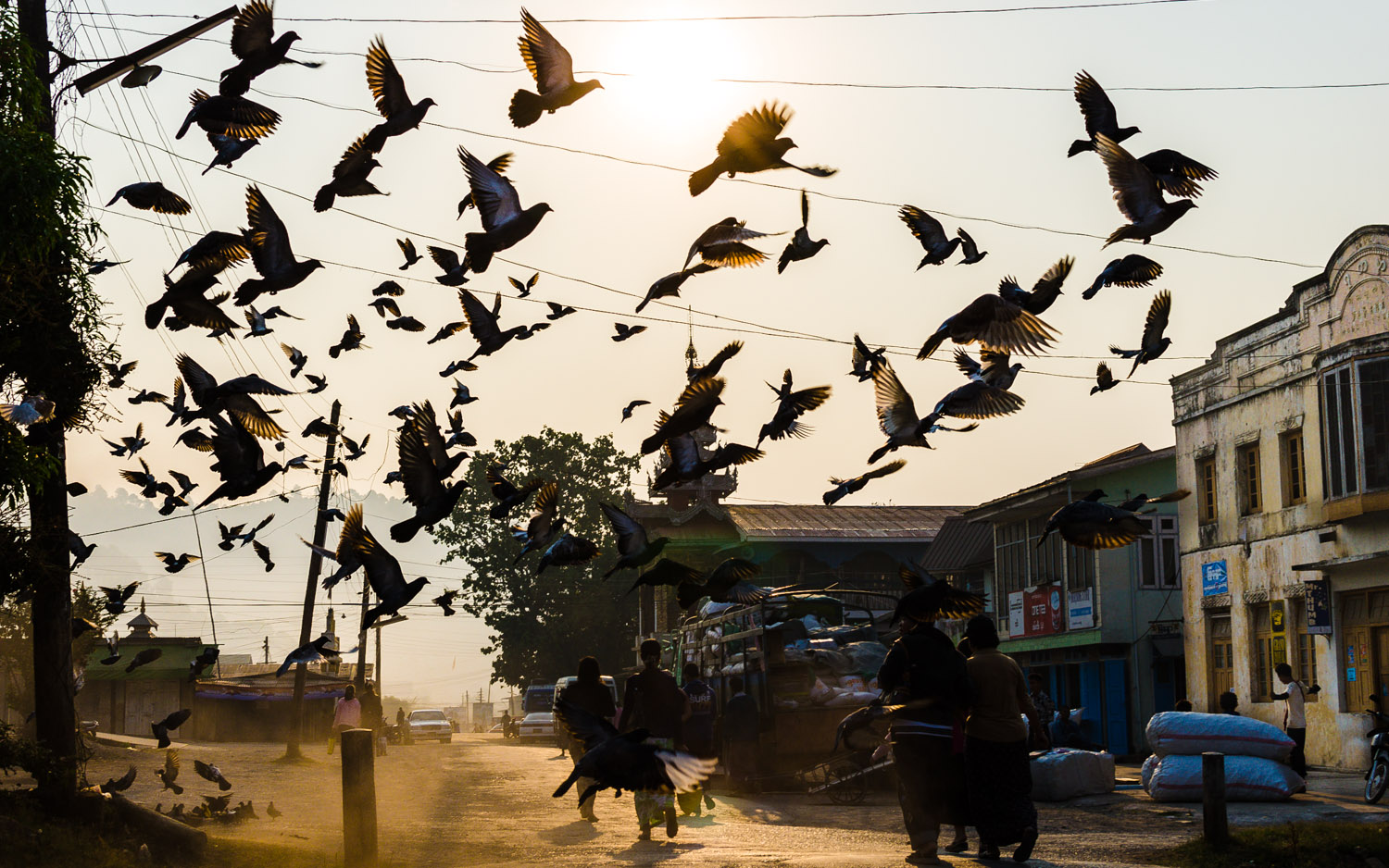 Birds stir at sunrise as kids run to the market and the town of Kalaw begins to wake.  Myanmar / Burma  © Dustin Main 2013