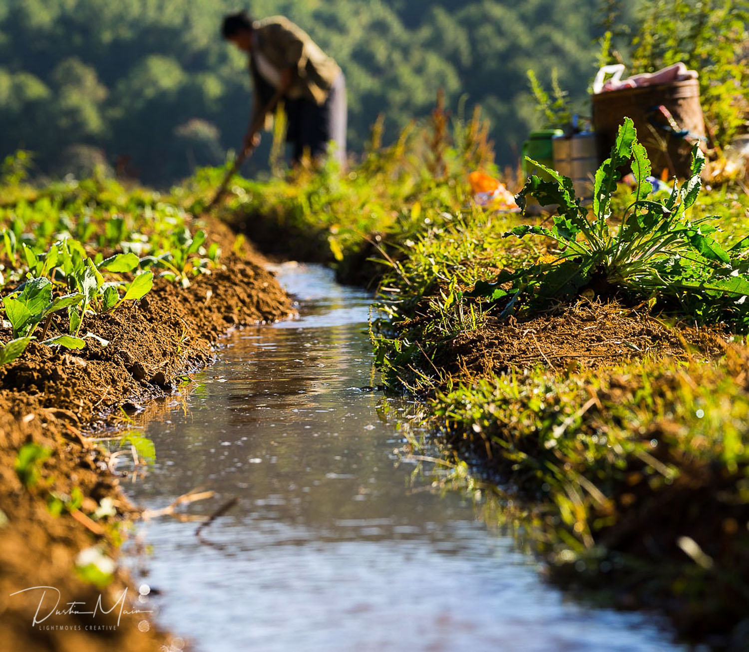 Water management with he help of local NGO's helps keep farmers in Shan State with valuable crops.  © Dustin Main 2017