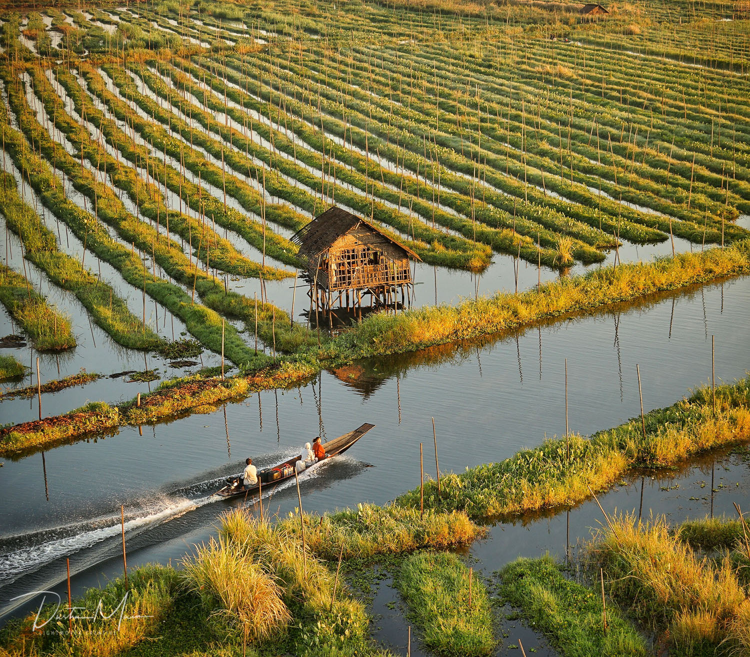 A boat leaves the village and heads through the floating gardens of Inle Lake (Myanmar) after sunrise. © Dustin Main 2017
