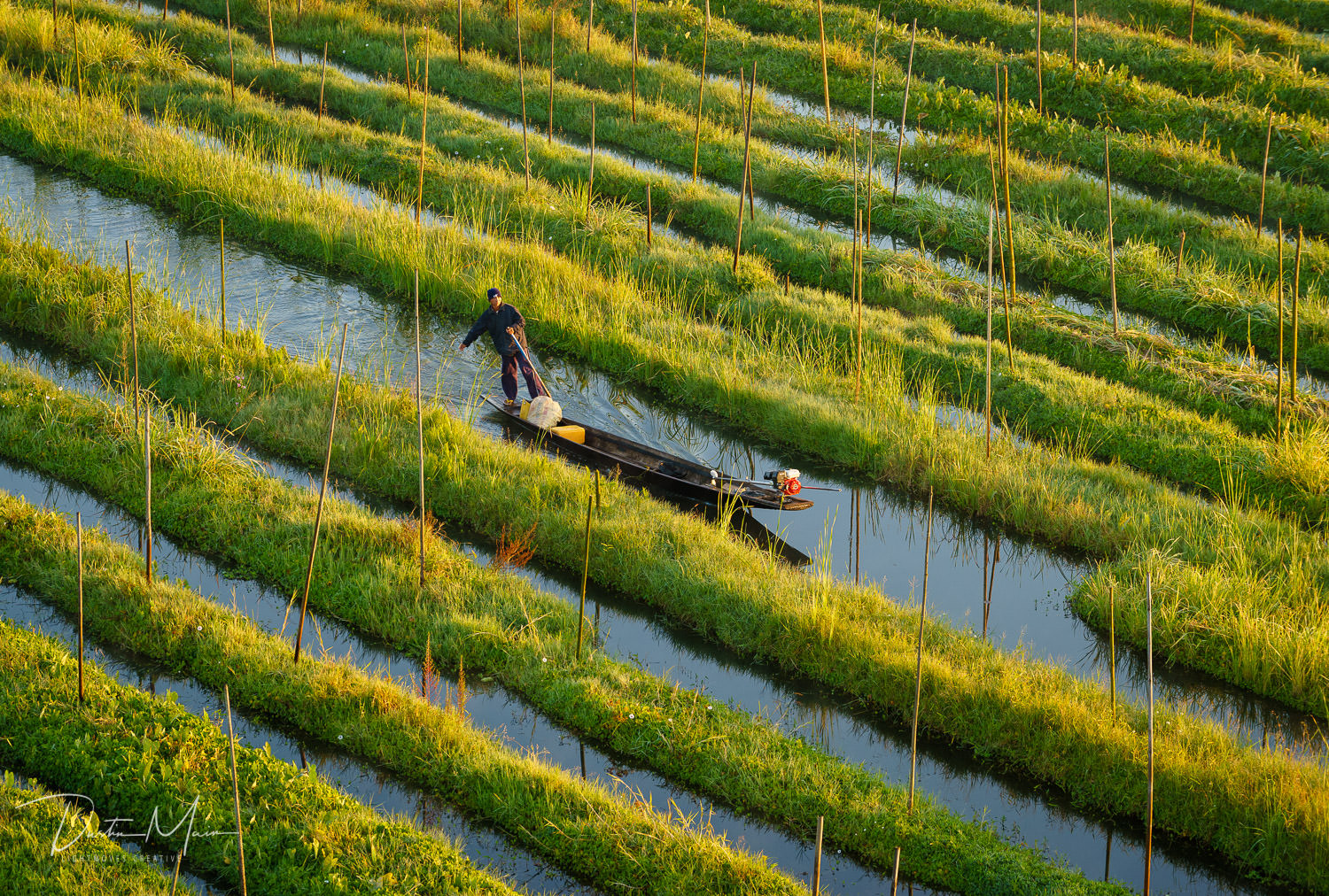 An Intha farmer paddles through the rows of floating gardens shortly after sunrise over Inle Lake.  © Dustin Main 2017