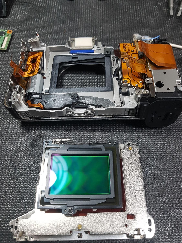 a7ii-camera-ants-11.jpg
