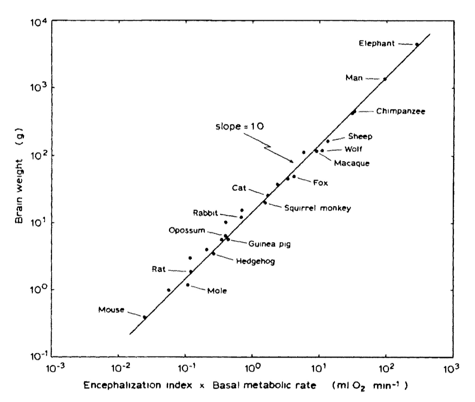 Image : Brain weight as a function of the degree of encephalization multiplied by the basal metabolic rate. Hofman (1983)