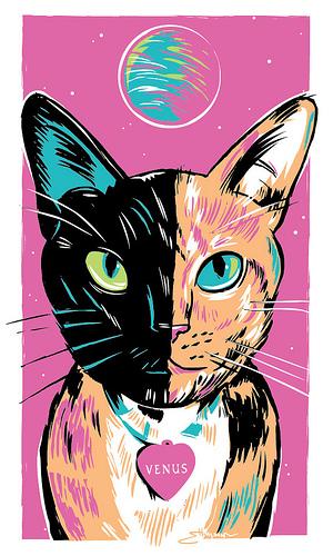 """Venus"" the Chimera cat"