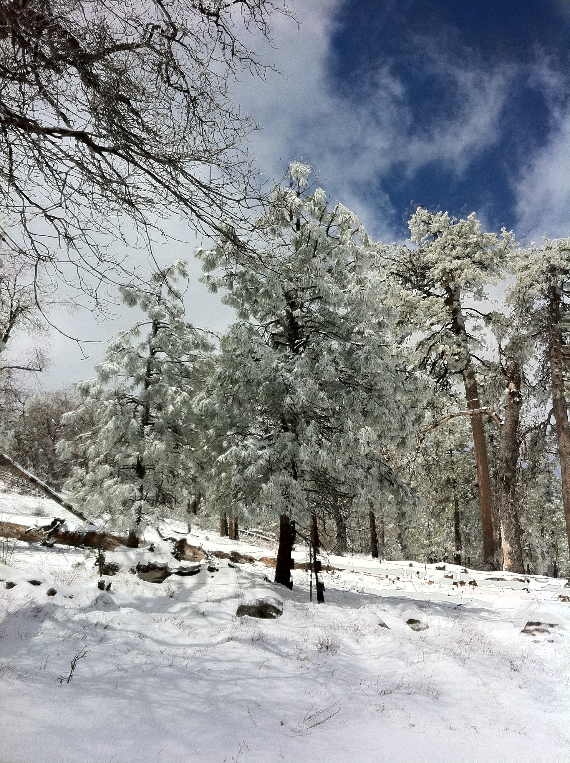 Winter, Laguna National Forest