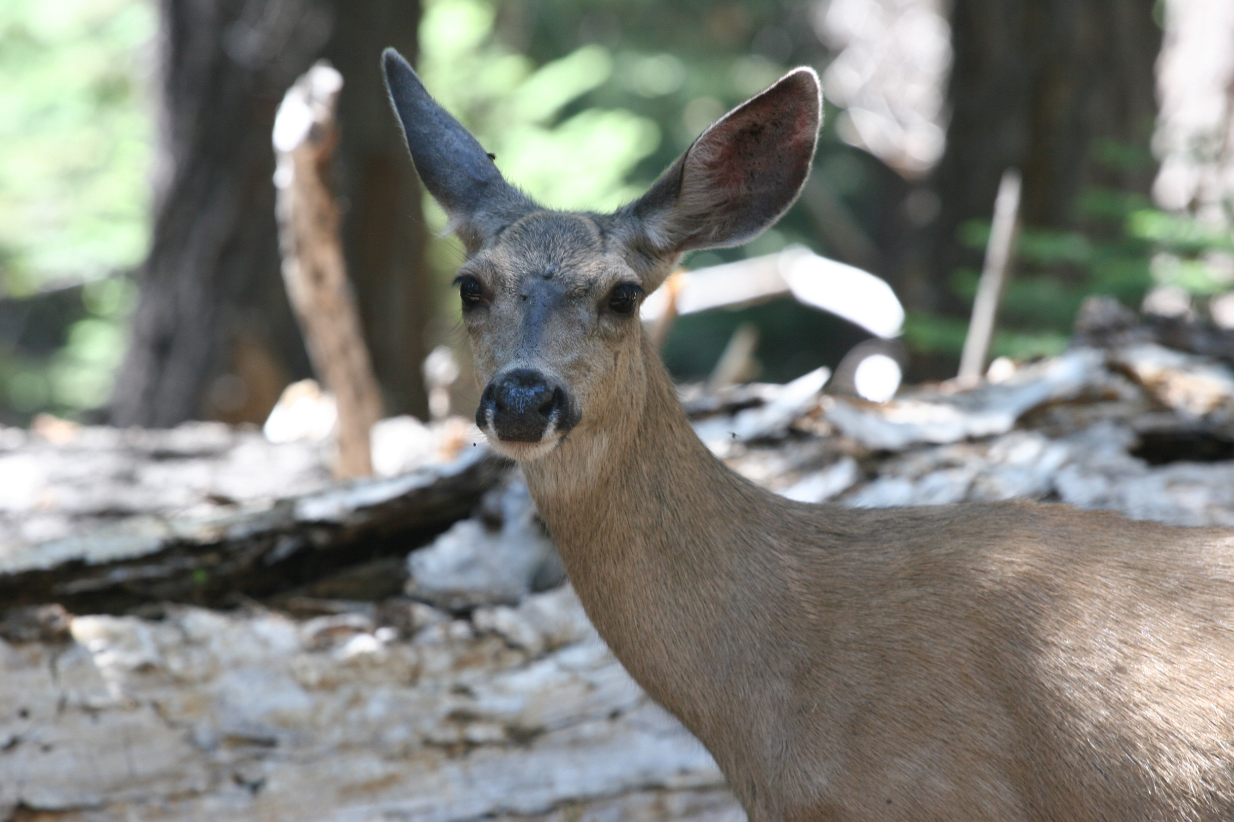 A healthy deer. Now, imagine, just you - and the head - on the trail, in the wilderness, alone...what would you do?