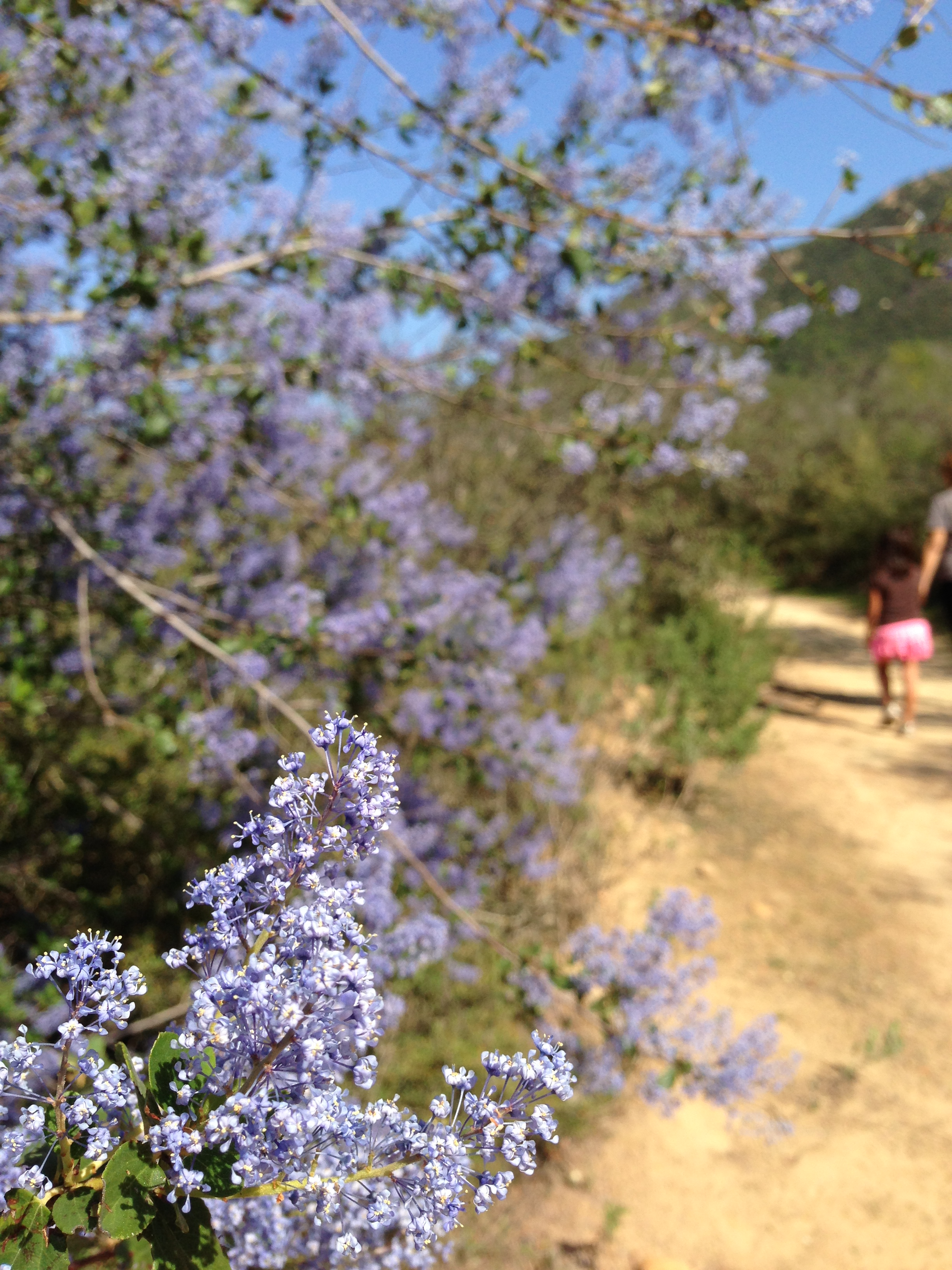 Spring Flowers, Botanical Trail, Elfin Forest, 2013