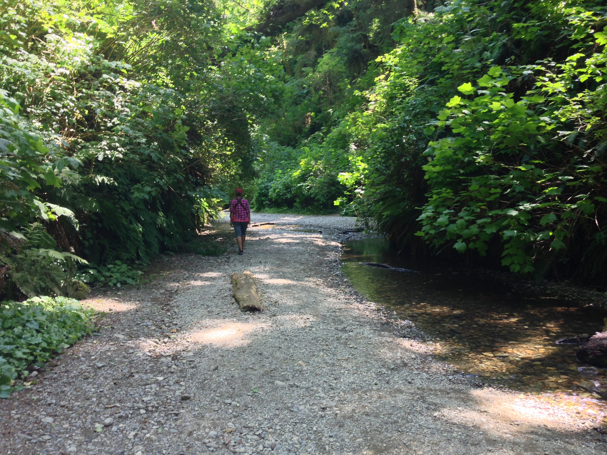 Entering Fern Canyon, July 2014