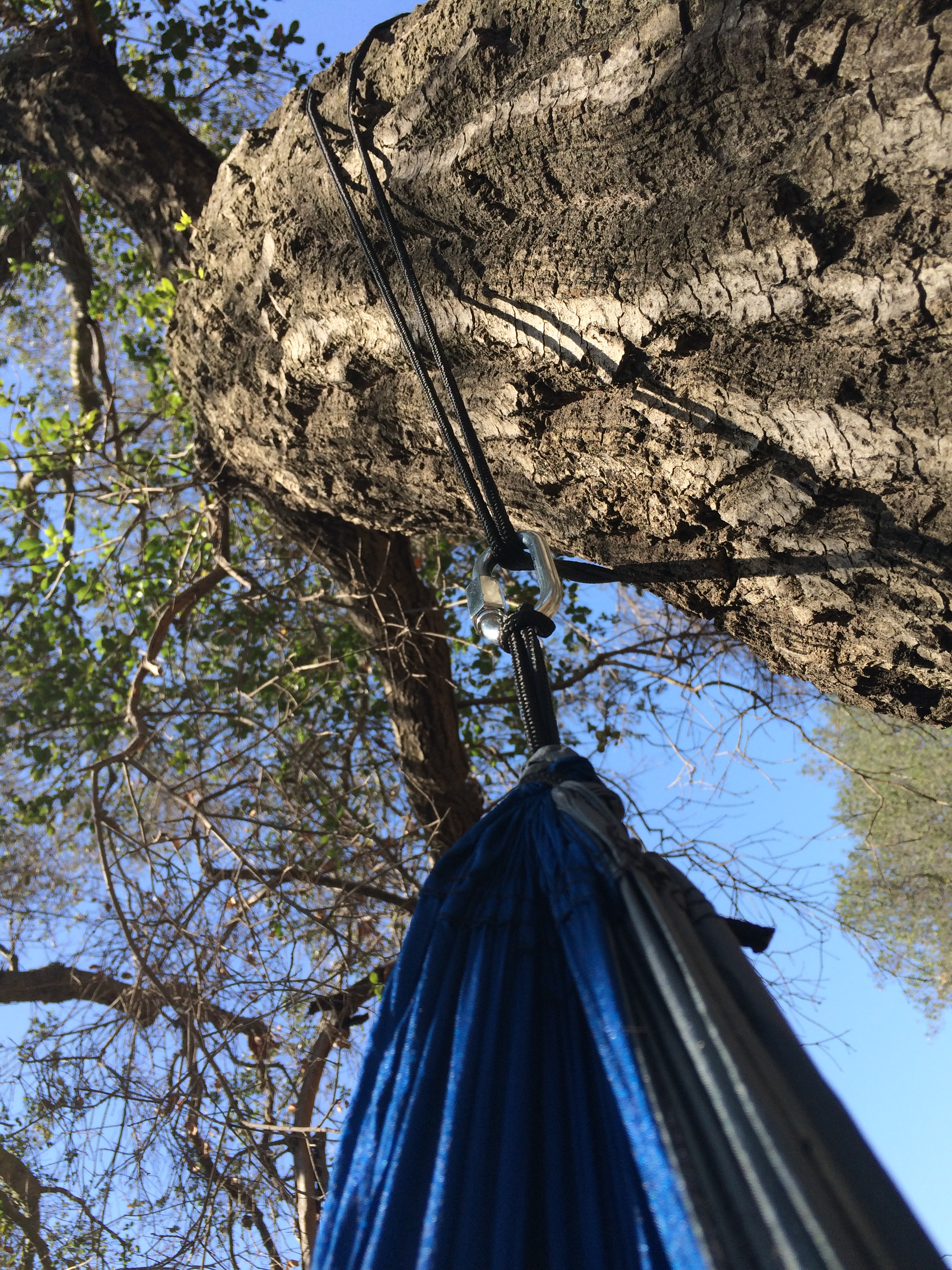 The polypropane cables and carabiners provide a durable and secure connection to the tree.