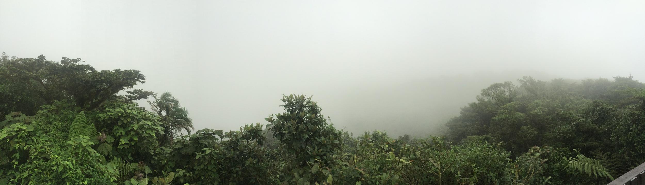Monteverde Cloud Forest, August 2015