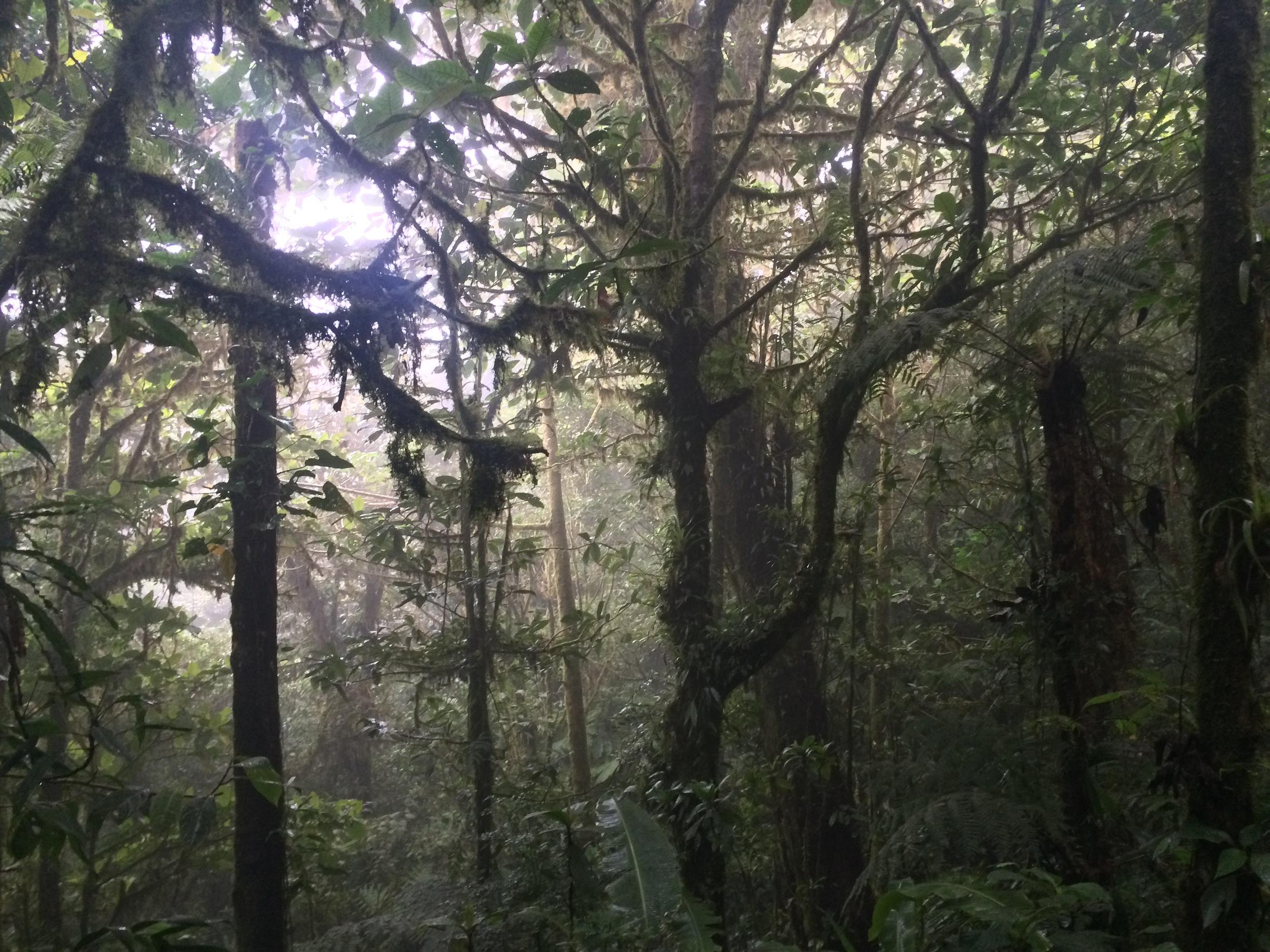 Sendero Wilford Guindon, Monteverde Cloud Forest Reserve, August 2015