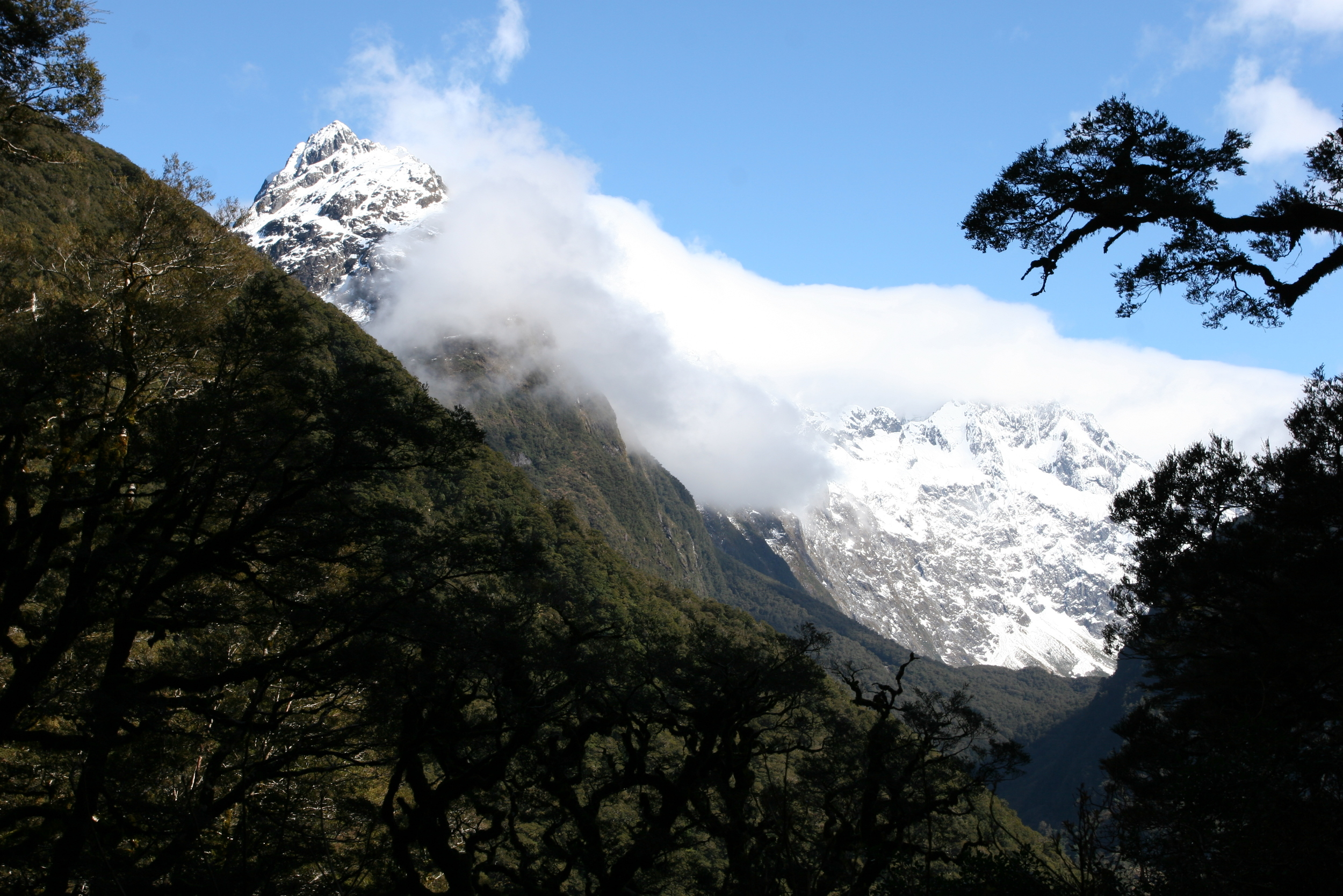 Beech Forest looking out on New Zealand's Southern Alps at the start of Routeburn Track