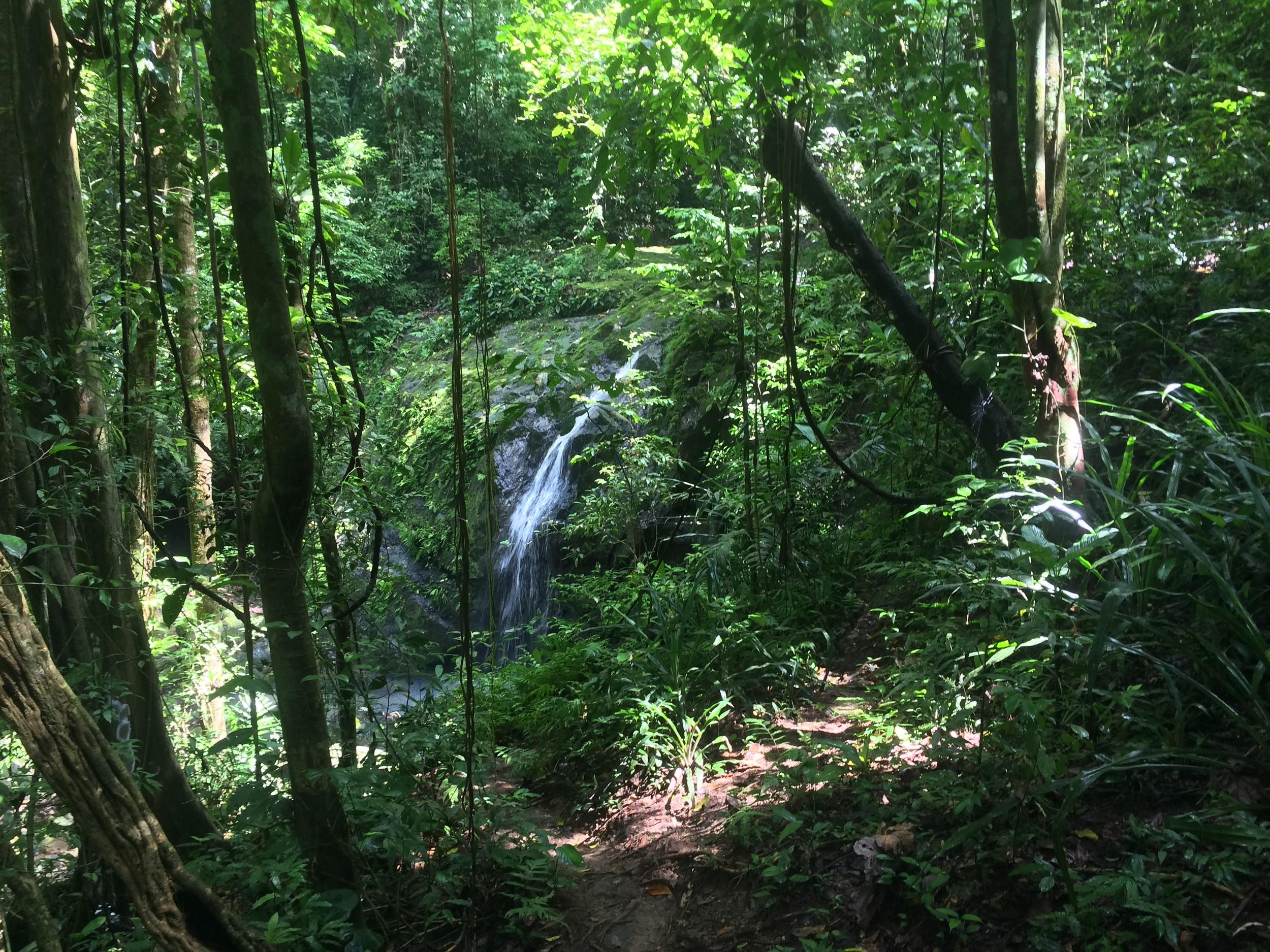 Waterfall, Manuel Antonio National Park
