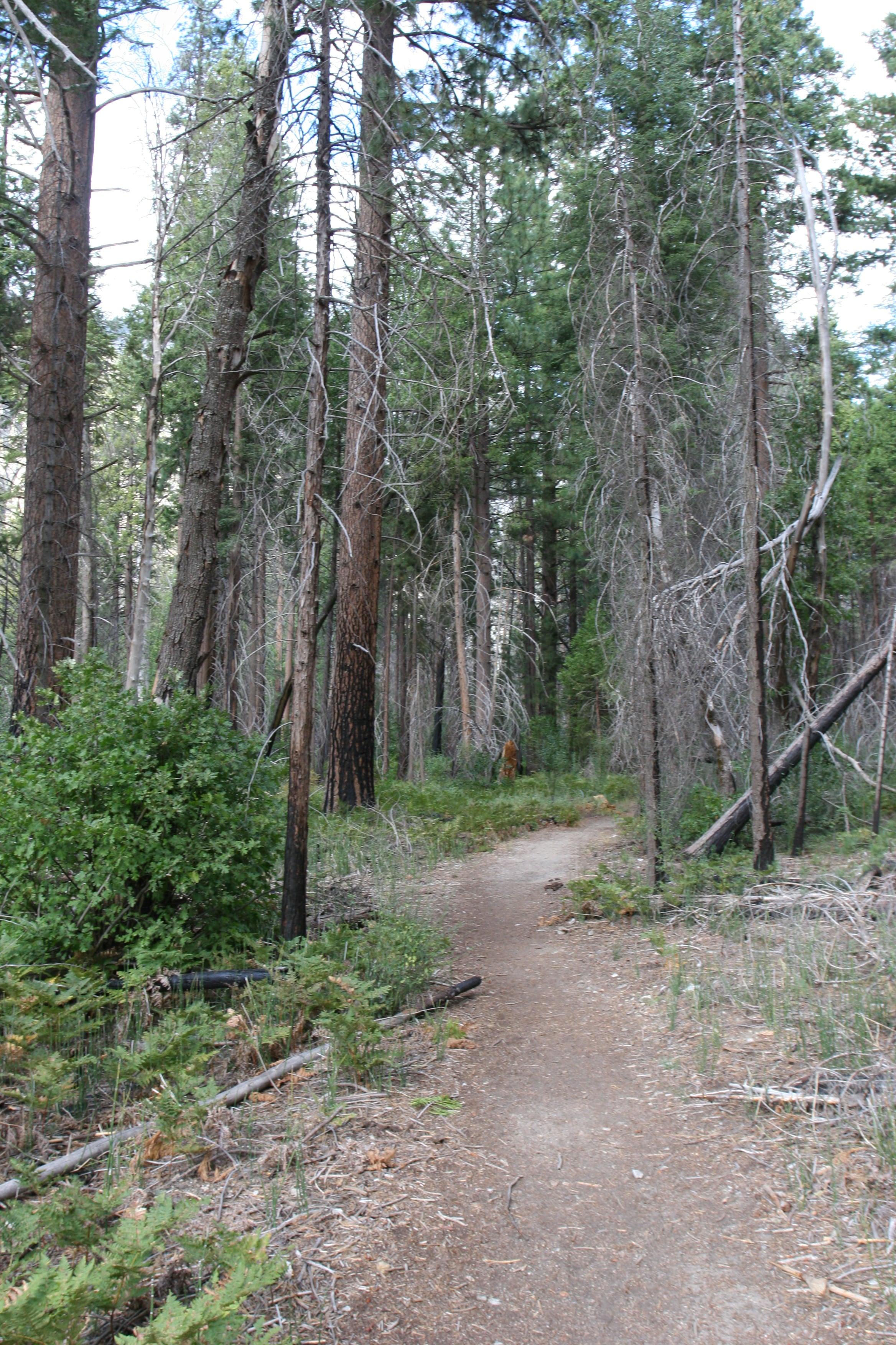 Trail Through Zumwalt Meadows