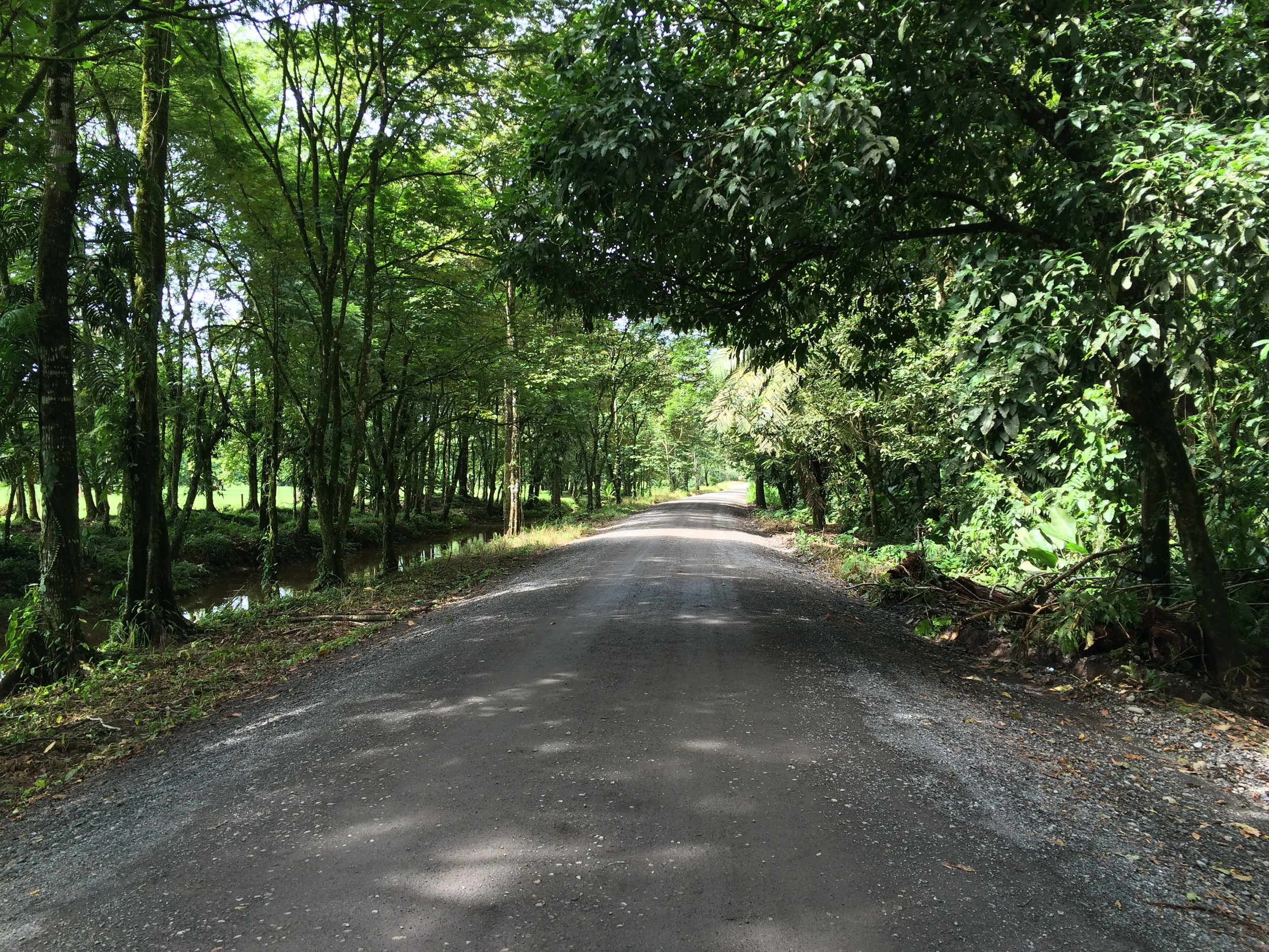 The trip to Tortuguero is long, and requires a drive from San Jose to La Pavona. Shortly before La Pavona, the road becomes slightly unpaved and rutted. From La Pavona, visitors must take a boat to Tortuguero.