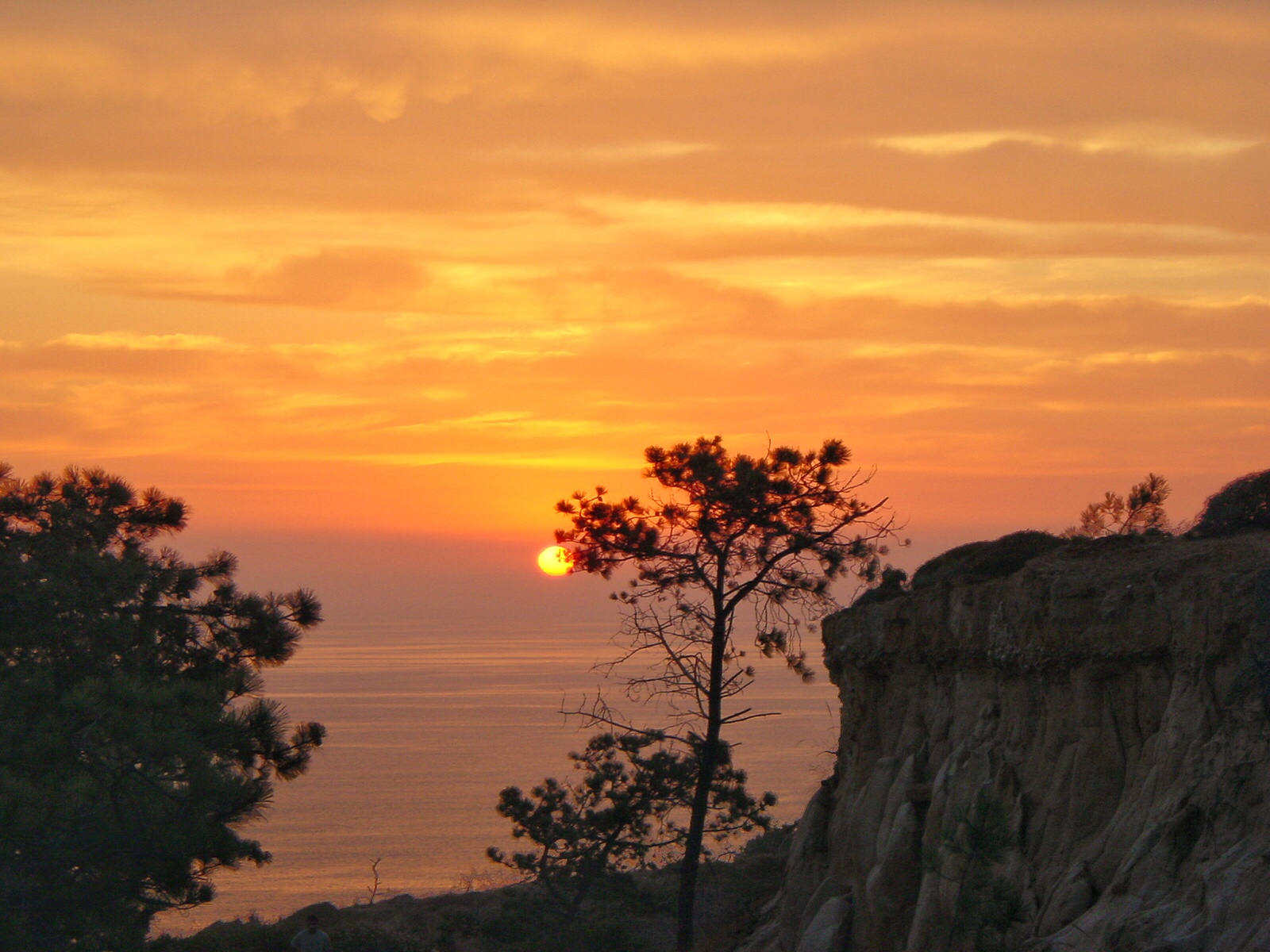 Torrey Pines State Reserve has the rarest trees in North America, and great sunset views.