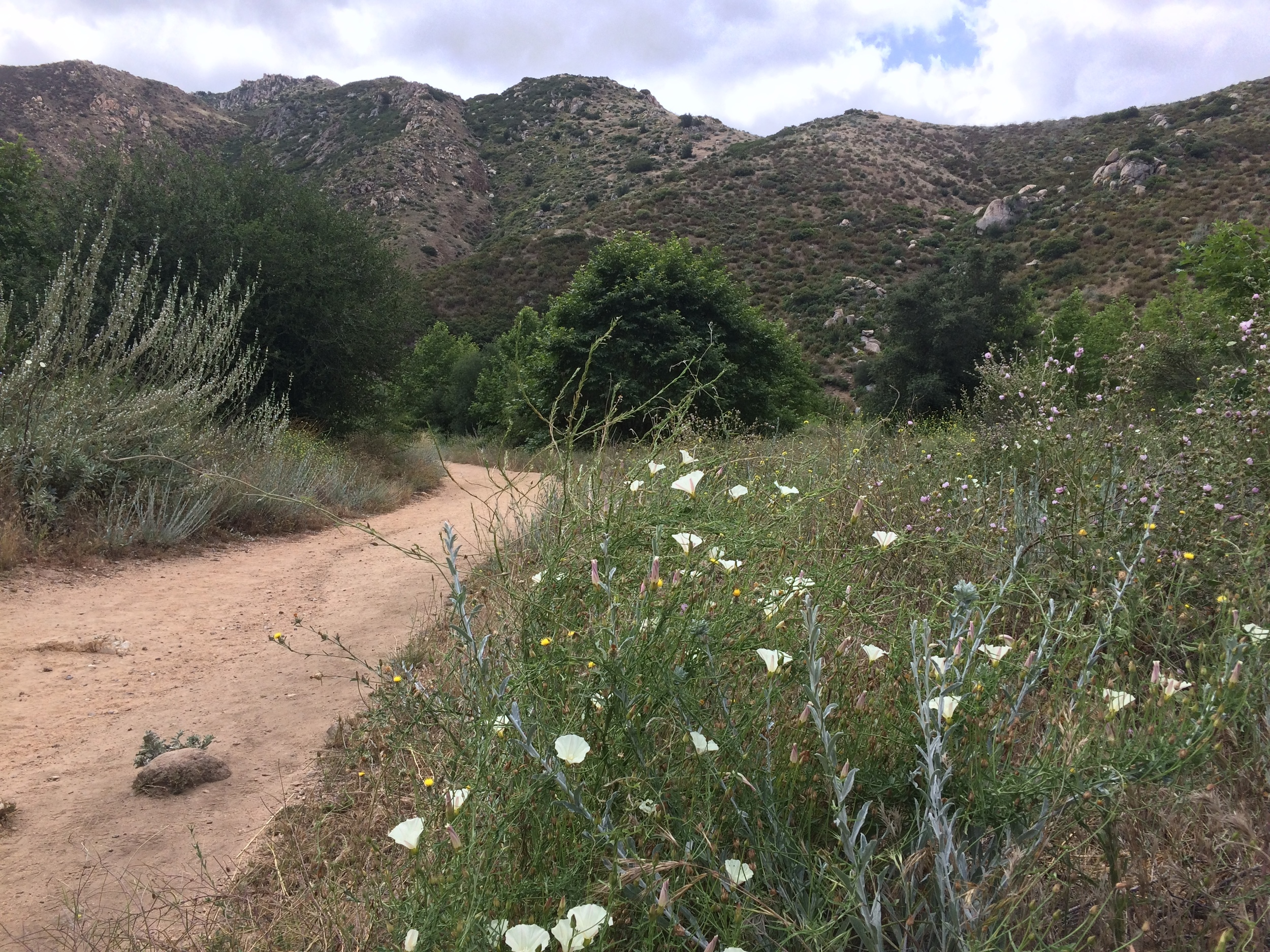 During the spring and winter months, hikers will see native wildflowers on the trail.