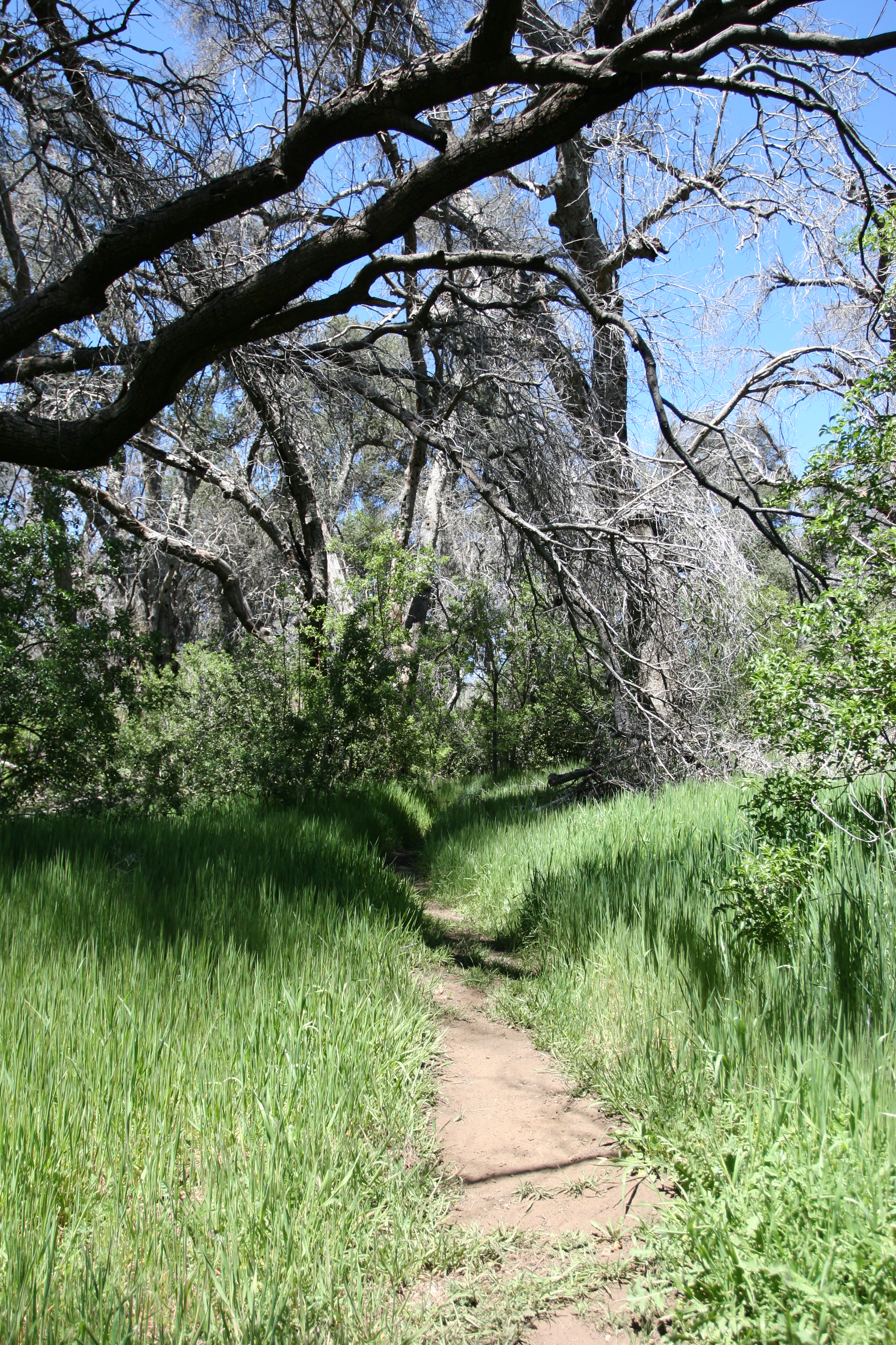 The trail to Harper's Creek and Falls leads through and along some pristine meadows and forests.