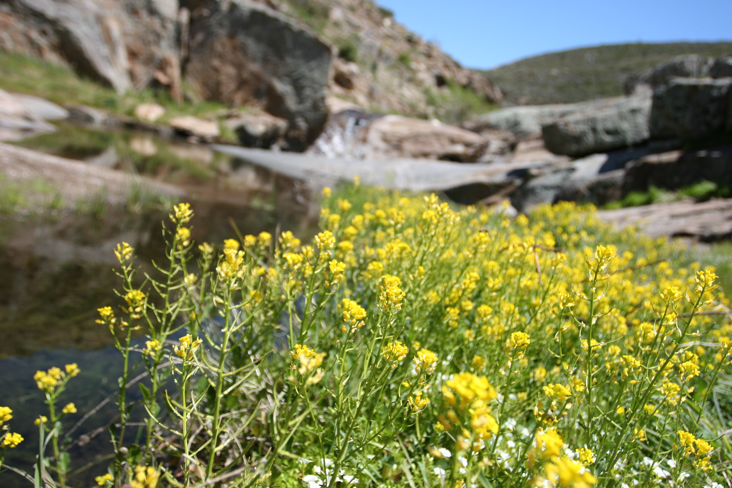 This area is a great spot to see spring wildflowers alongside the creek.