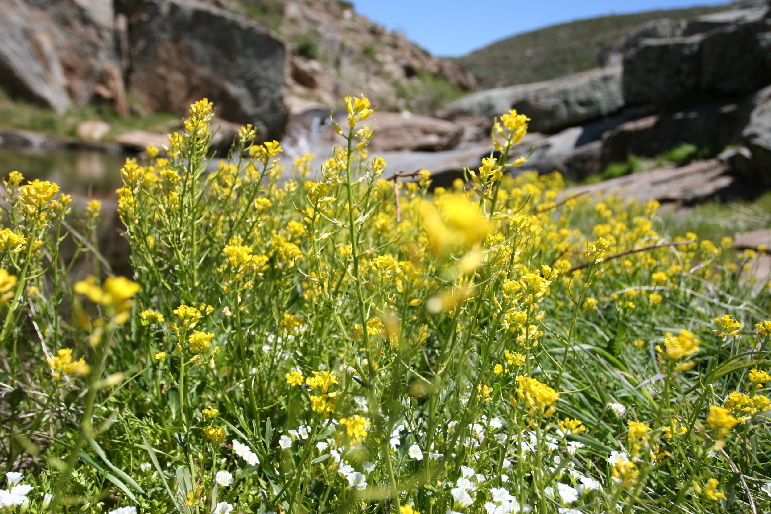 Harper's Creek is also a great spot to see wildflowers during the spring.