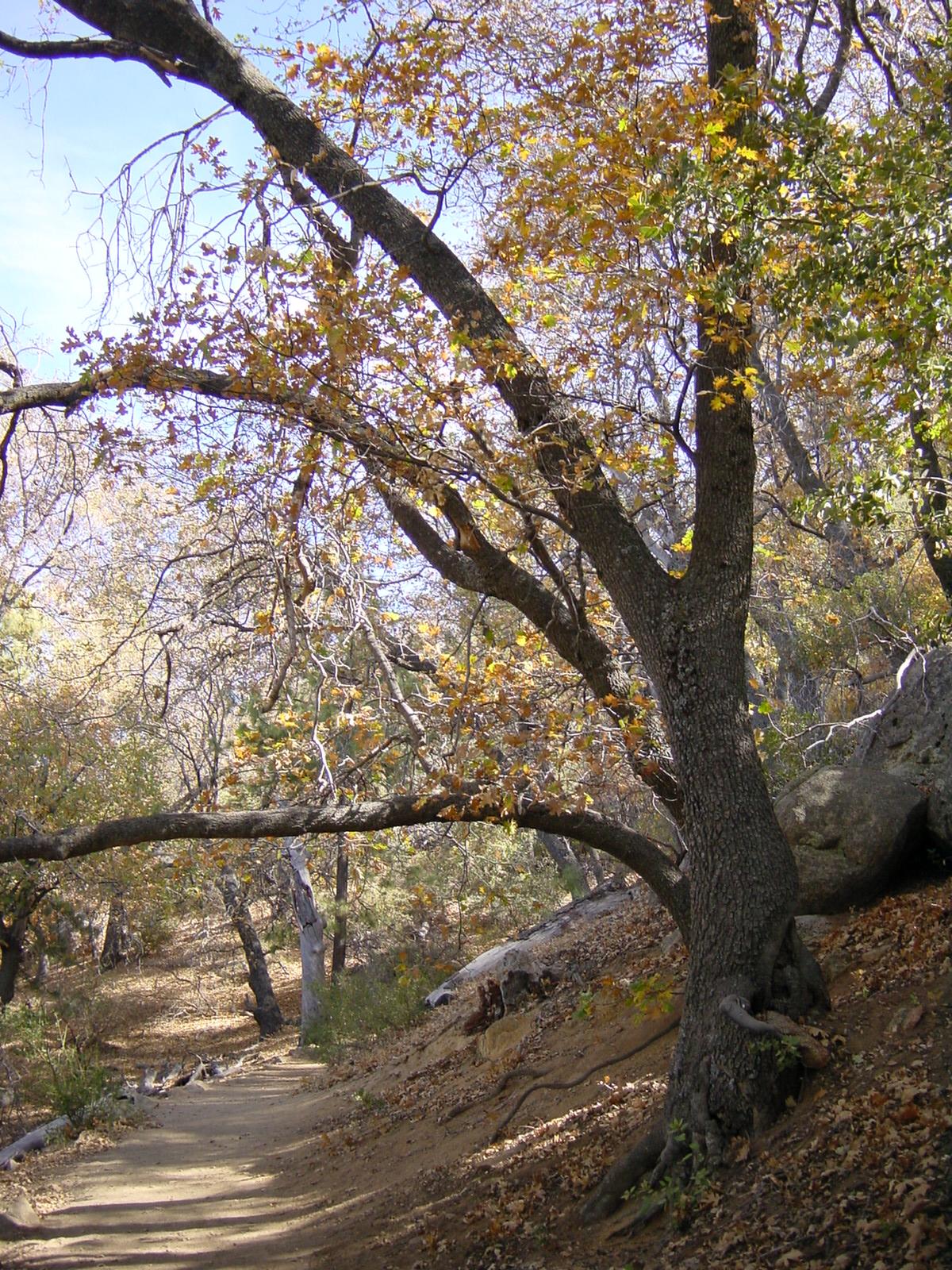 Stonewall Peak Trail