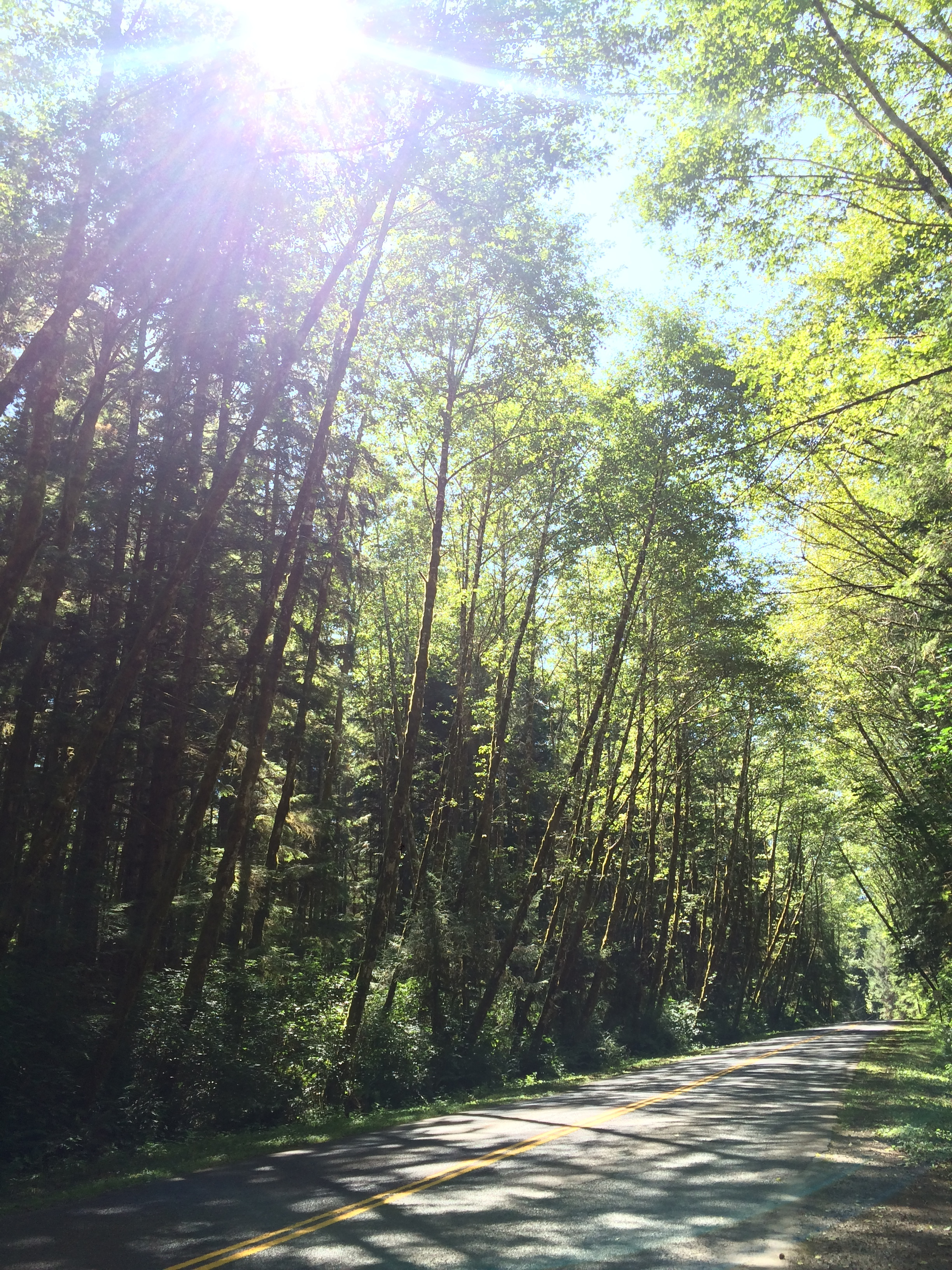 The Upper Hoh Road is also a scenic drive that should be enjoyed by visitors to Olympic National Park.