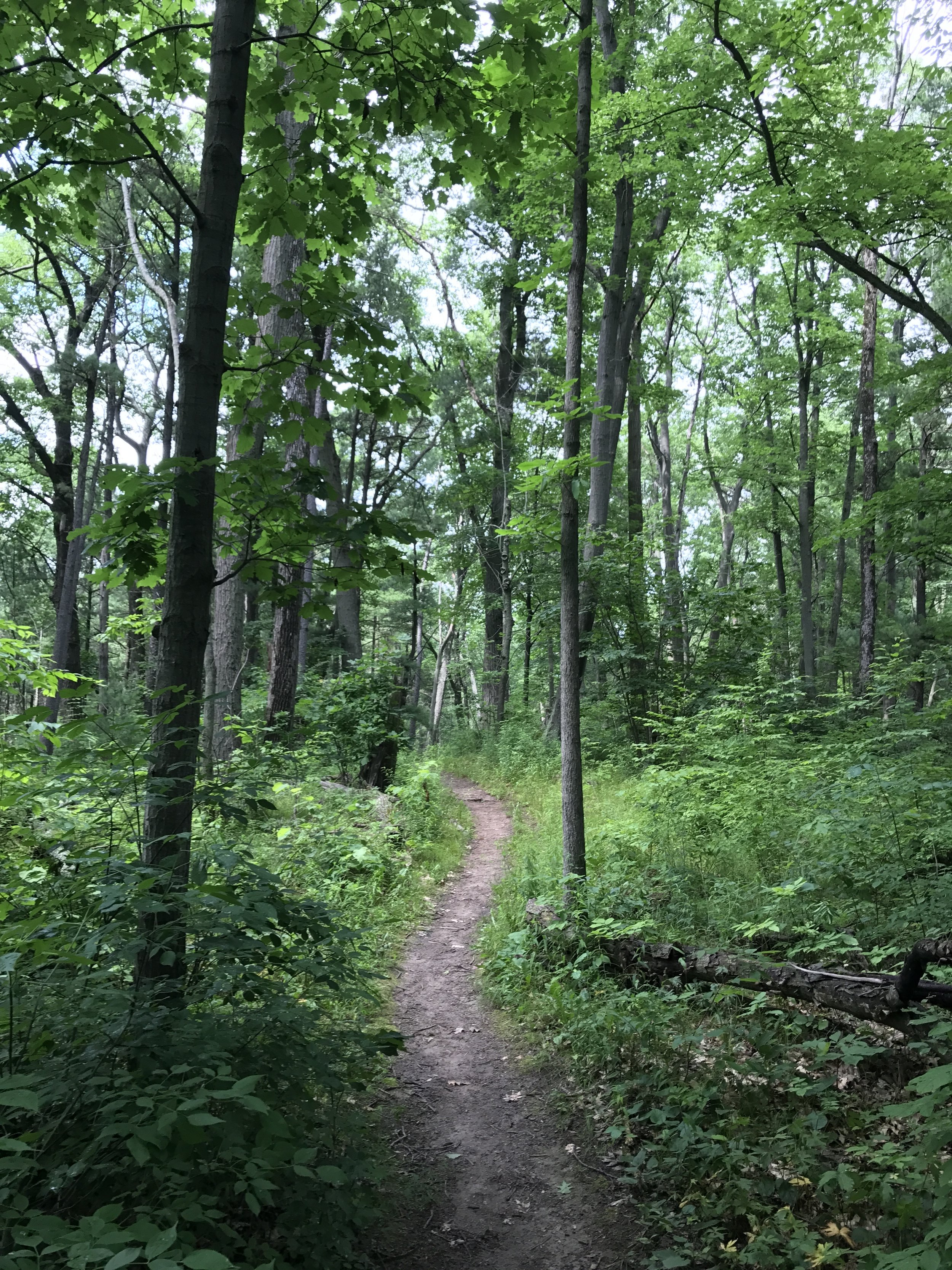 The Hickory Trail provides visitors to Pinery Provincial Park with a great, short wilderness experience.