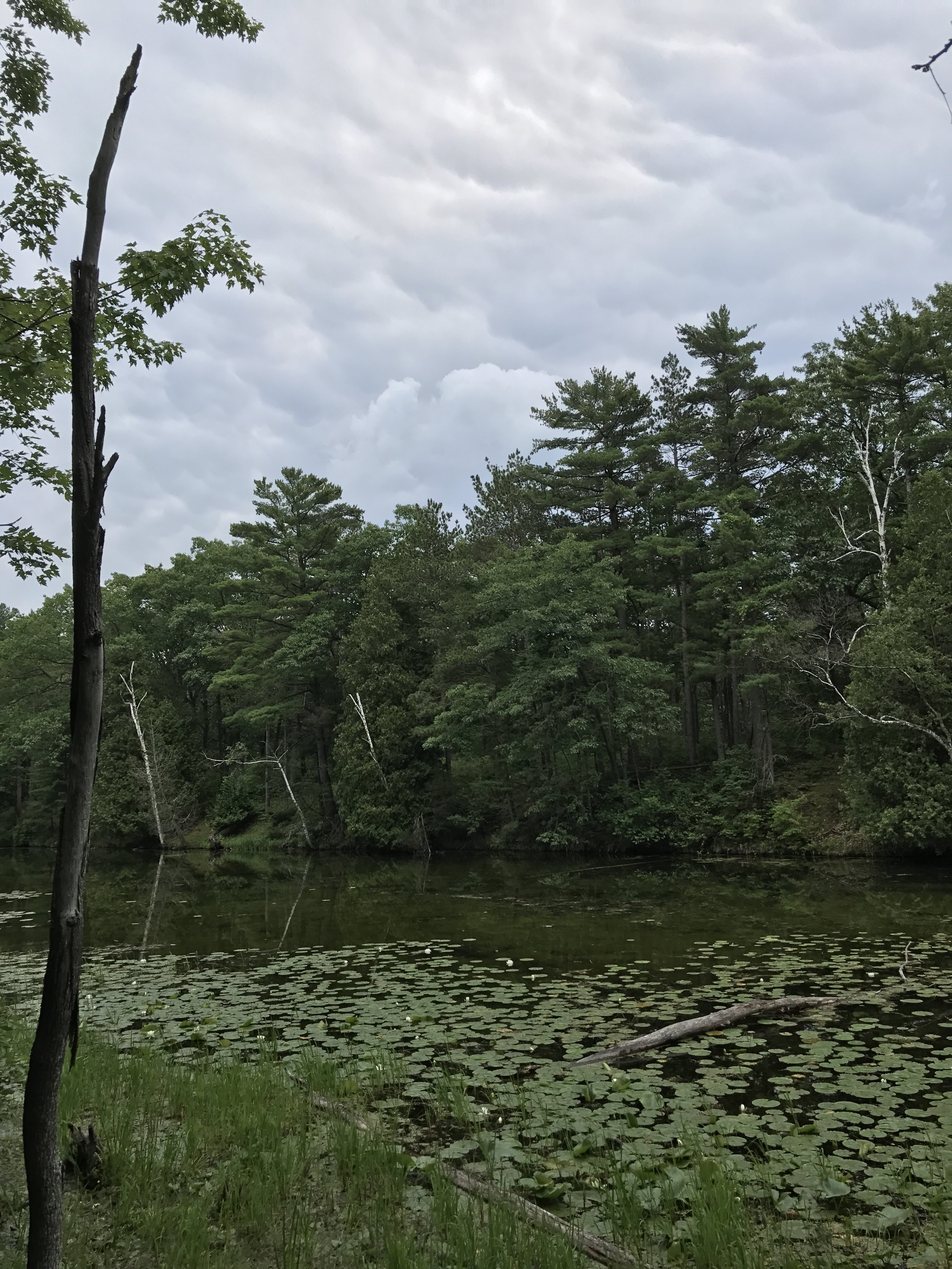 Old Ausable Channel, Hickory Trail