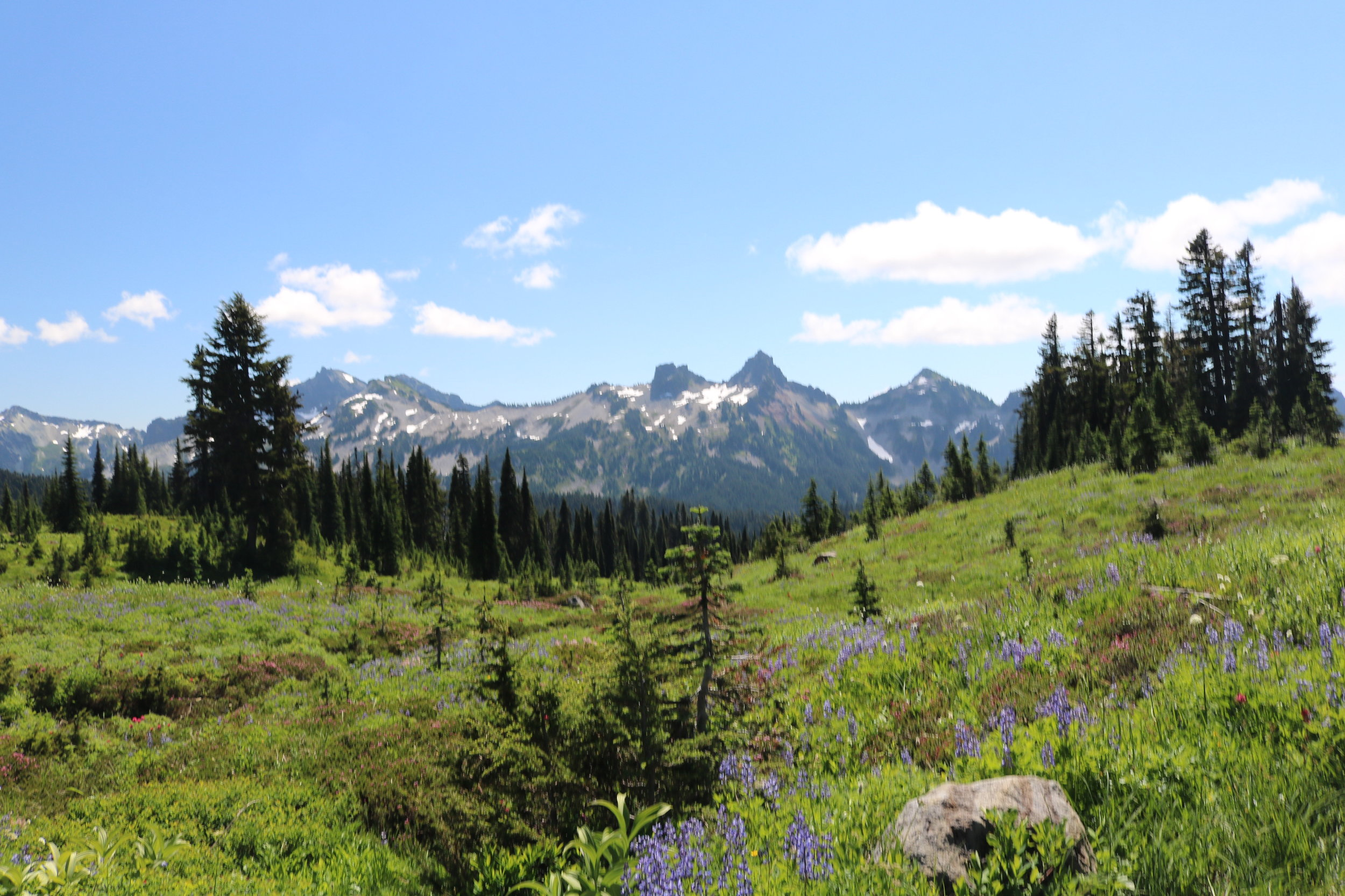 Mount Rainier National Park has great alpine views, and great alpine meadows.