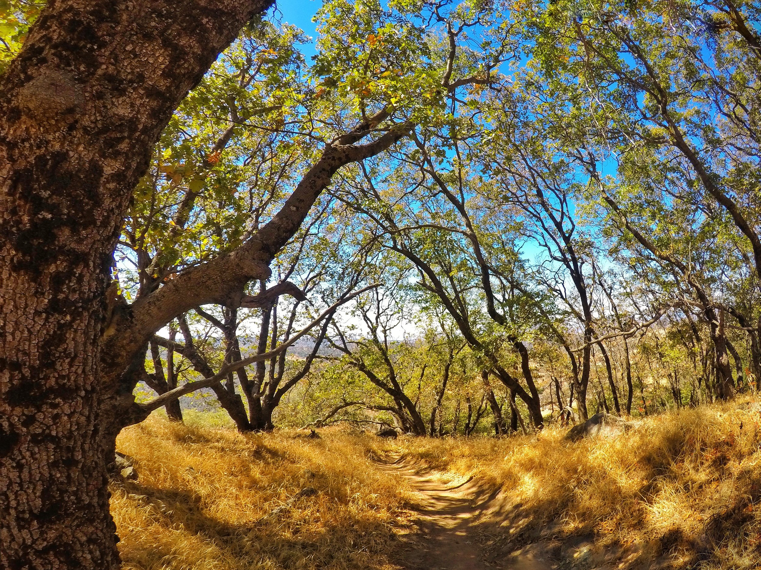 Ascending via the 5 Oaks Trail allows one greater shade, and interesting scenery versus the main Volcan Mountain Preserve trail.