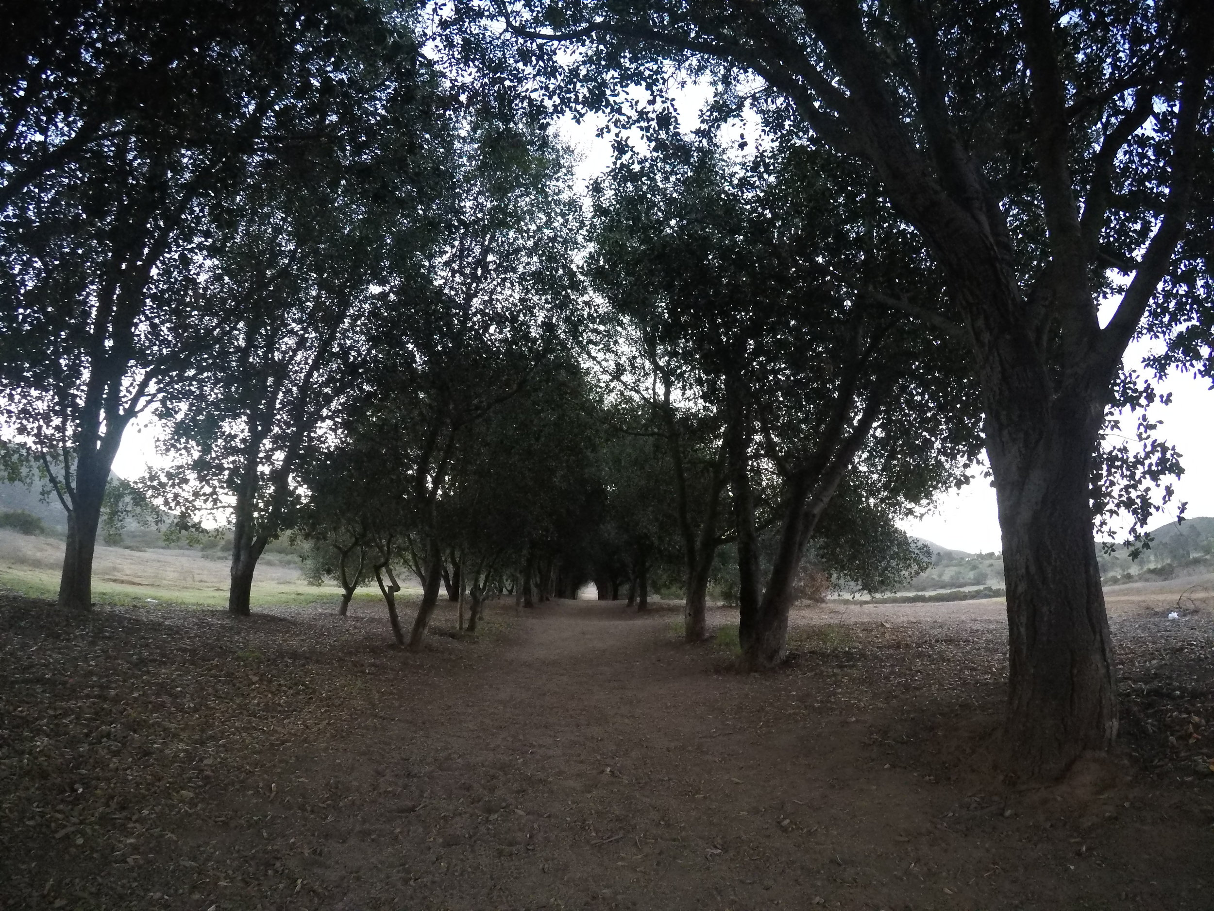 The first section of the Iron Mountain Trail heads through a scenic oak grove.