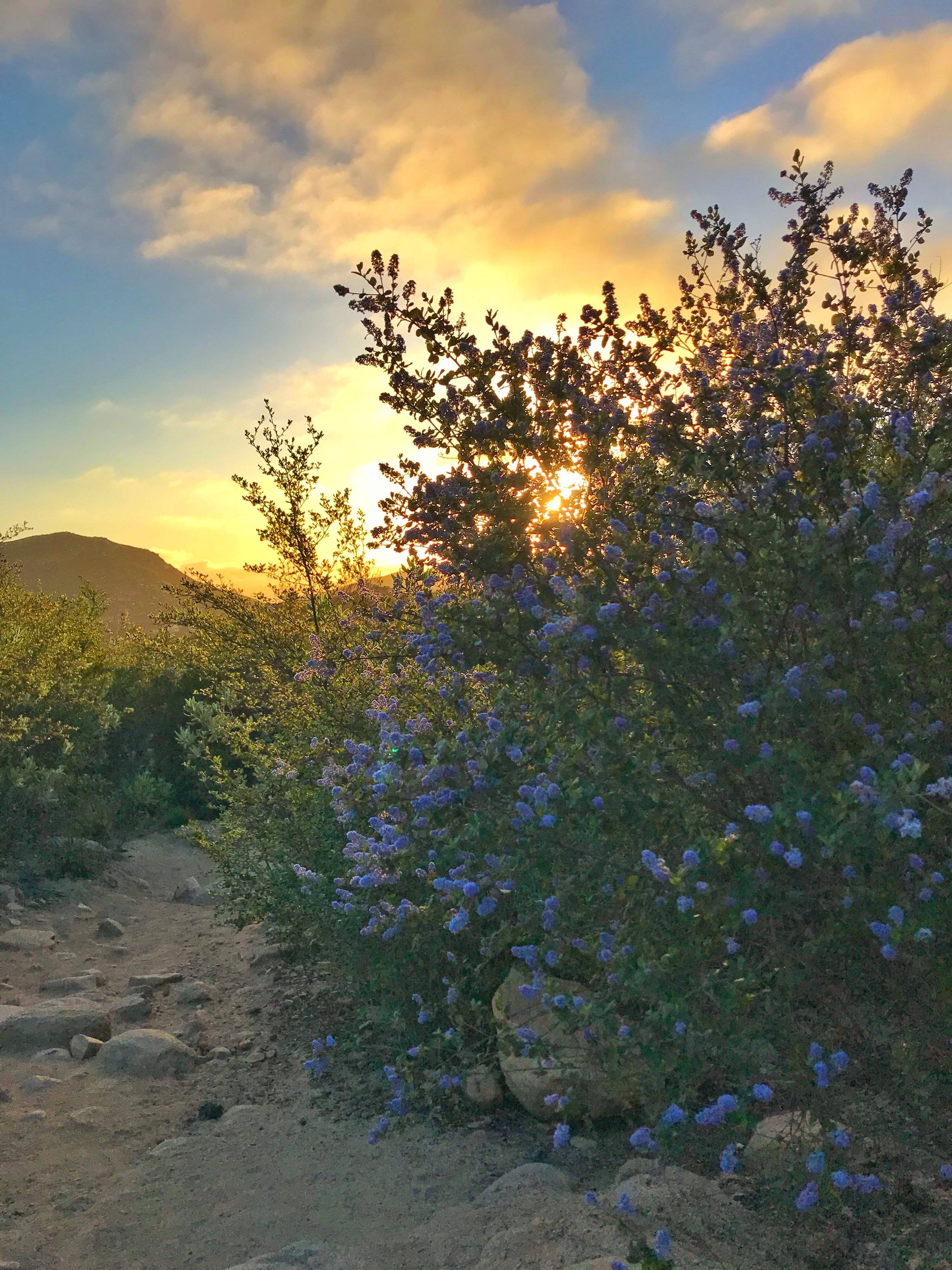 During the spring, hikers will be treated to a number of wildflowers blooming at, or along the trail.