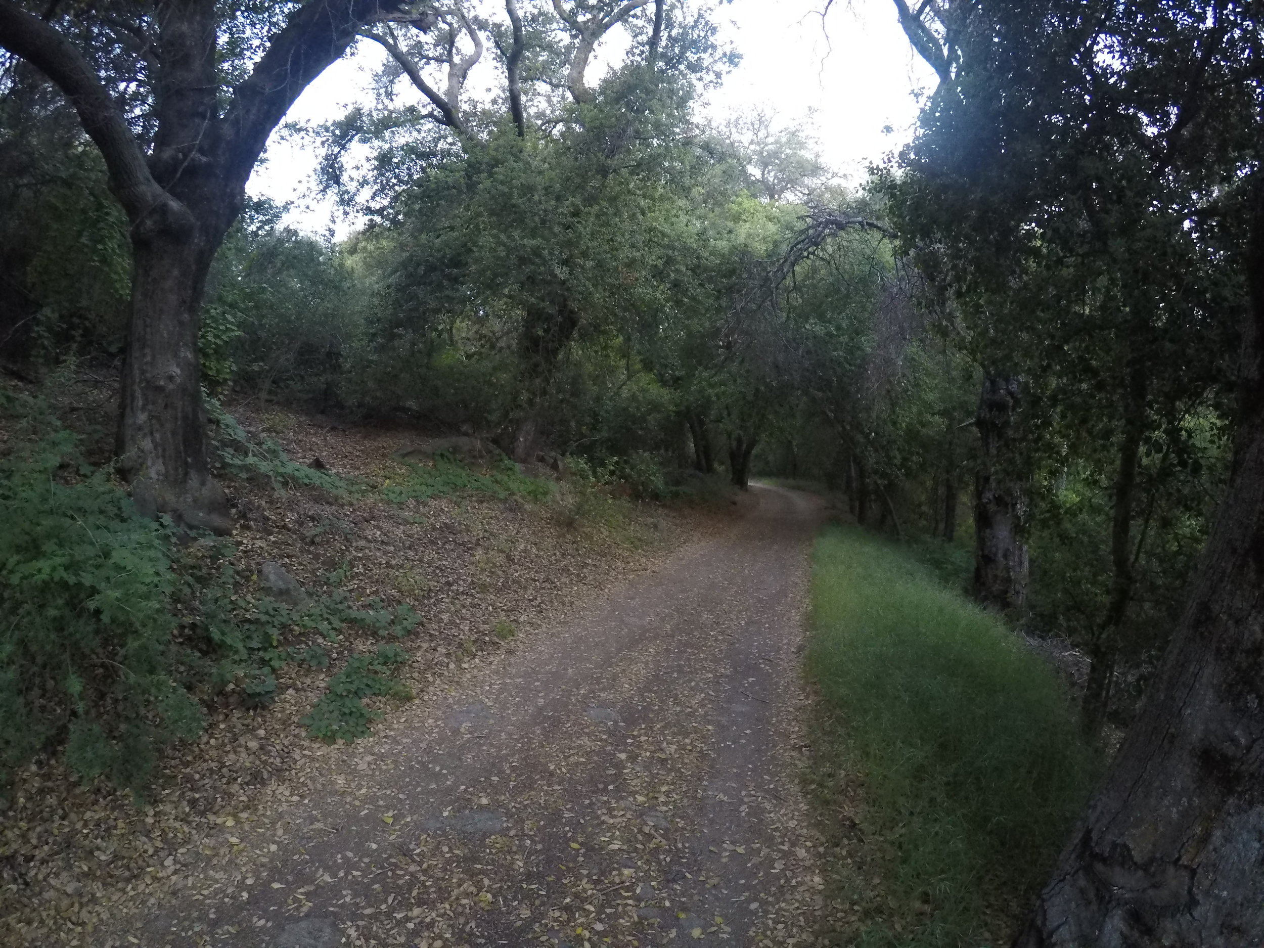 The early portion of the Corte Madera hike passes under some great old growth oaks.