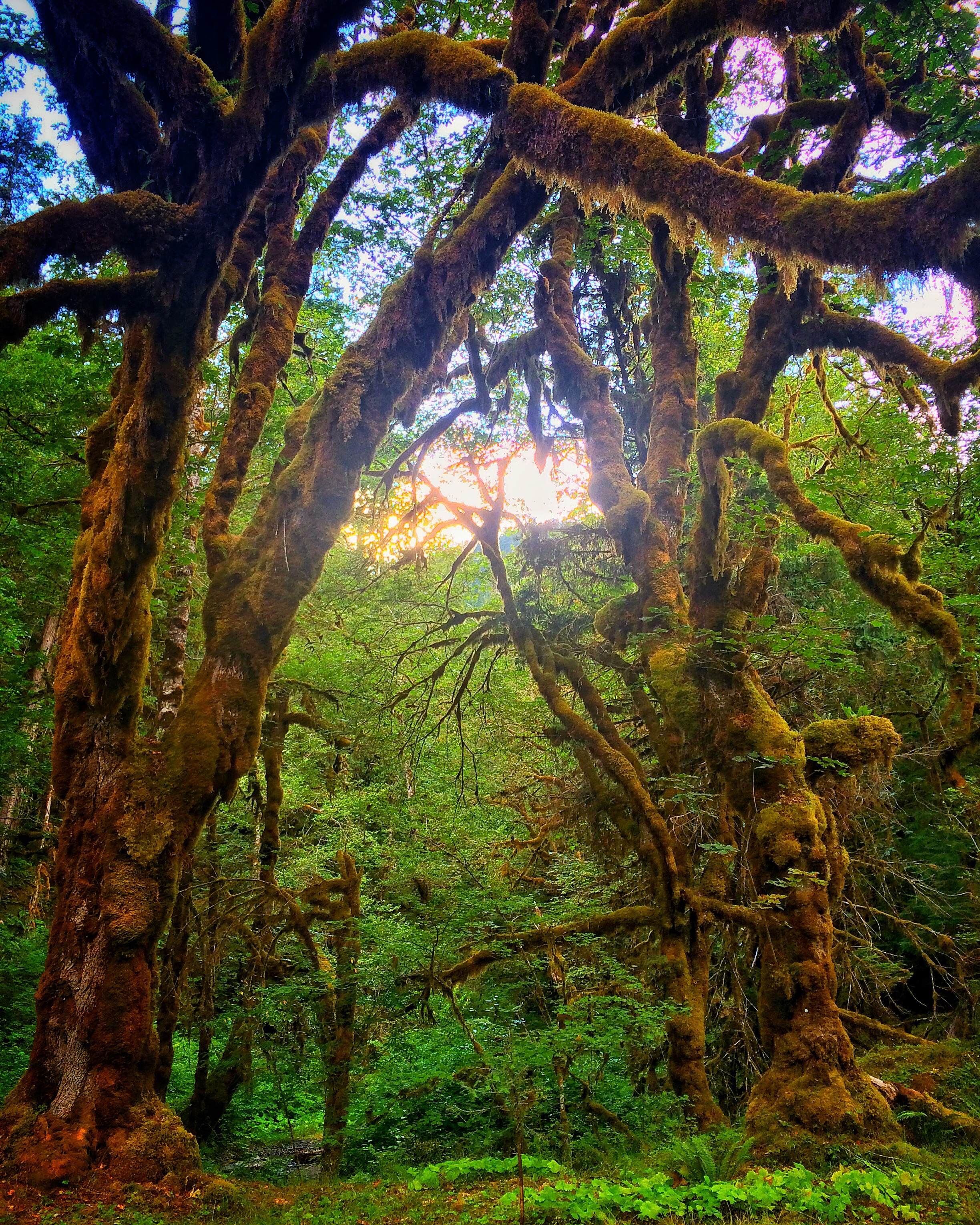 No matter where you turn on the Olympic Peninsula, there are phantasmagorical wild areas that are amazing.