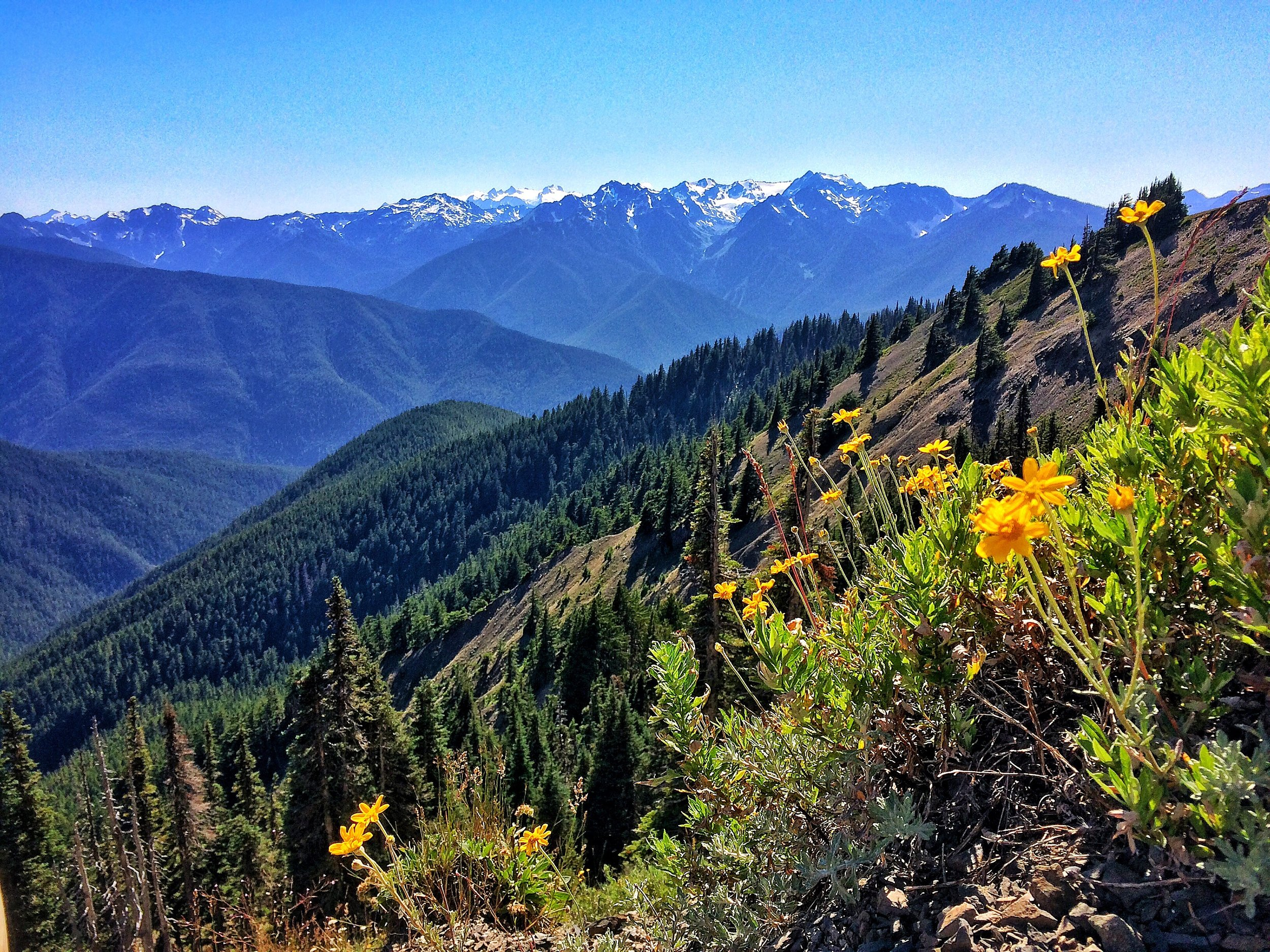 With contiguous National Forest land and National Park land, the Olympic Peninsula has one of the largest areas of biodiversity in the continental United States.