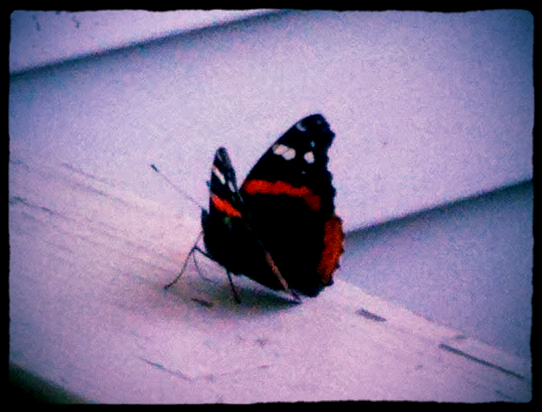 A visitor on my front porch - 8/2/12
