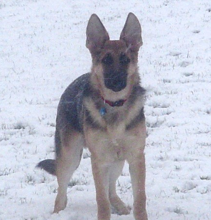 Young Nikko in the snow he loved