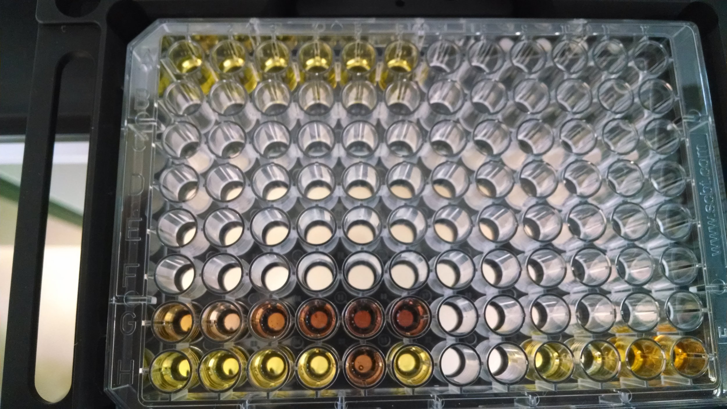 Microplate_with_reagents.jpg