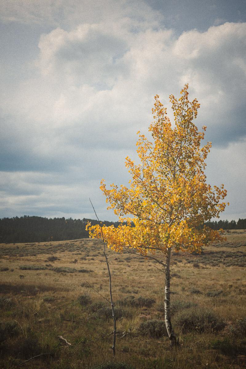 liefdephoto--20120923-6.jpg