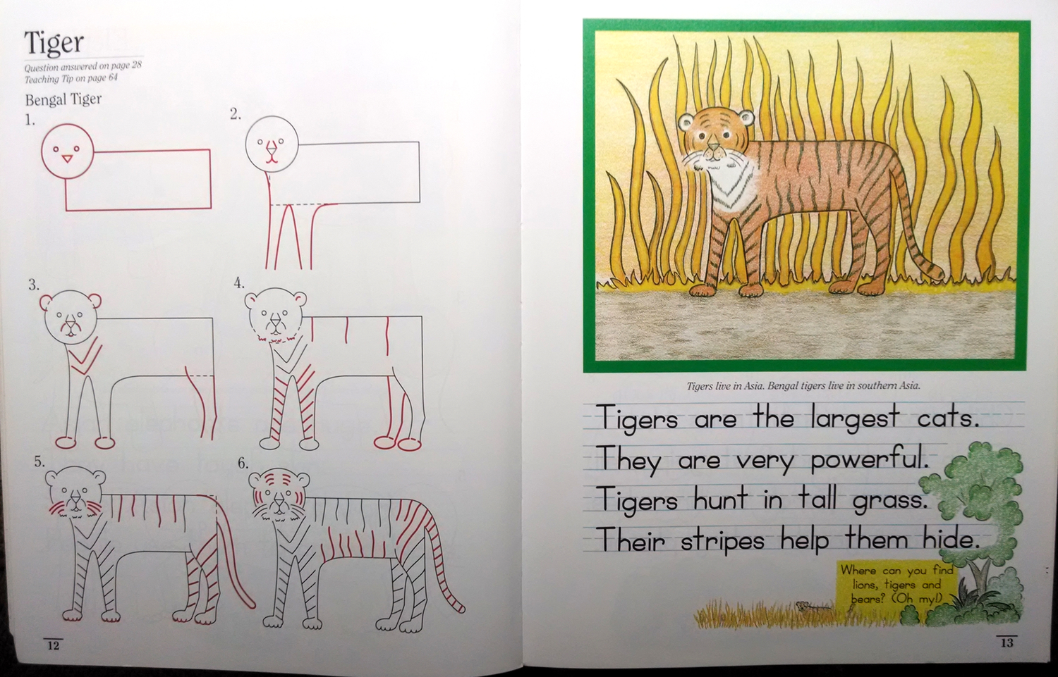 The lessons are simple and clean. This is how the Tiger Lesson appears in Draw-Write-Now, Book 7. CLICK IMAGE TO ENLARGE