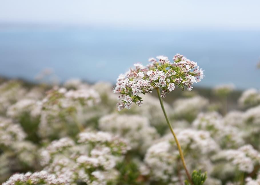 macro flower copy.jpg
