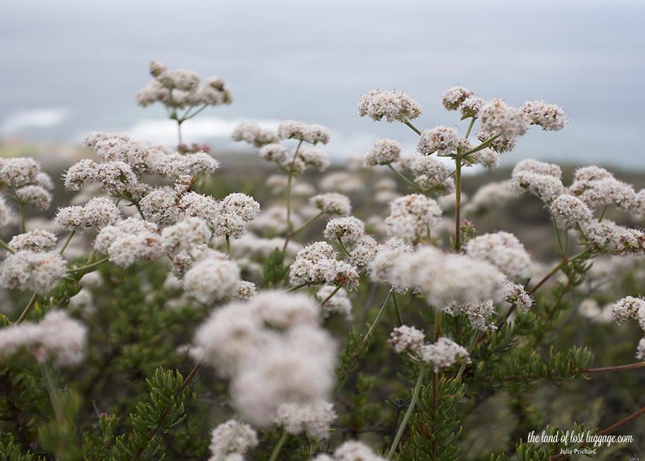 San Diego Landscape.jpg