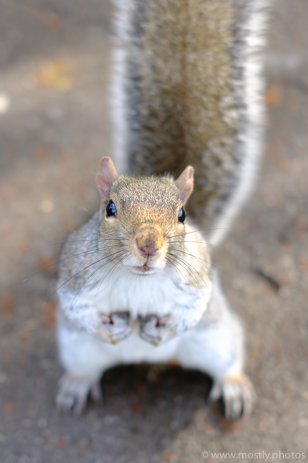 Regents Park Squirrel - Fuji X-T2 Velvia Film Simulation
