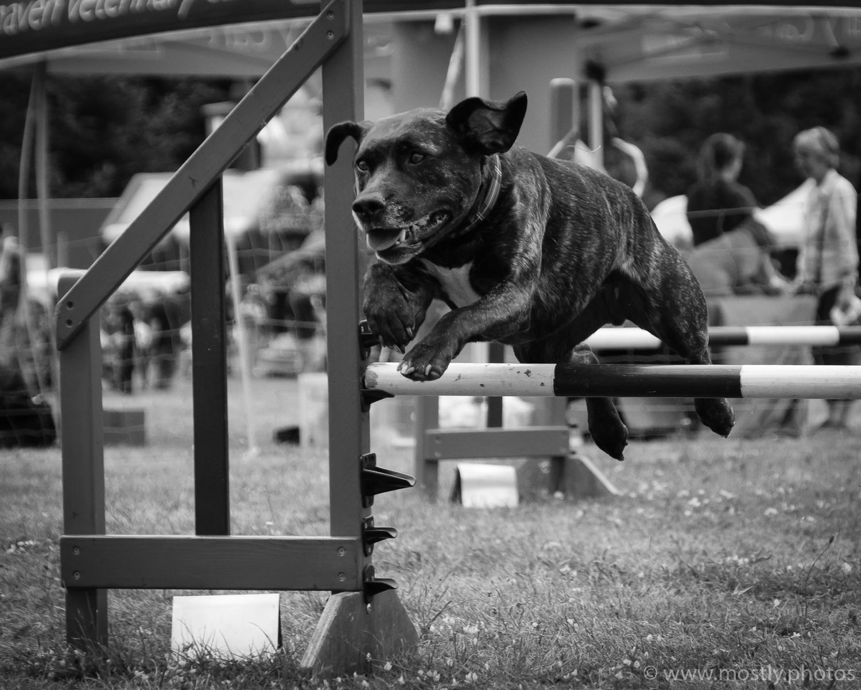 Fuji X-T2 and Fuji 18-135mm Autofocus Test Dog Agility Show